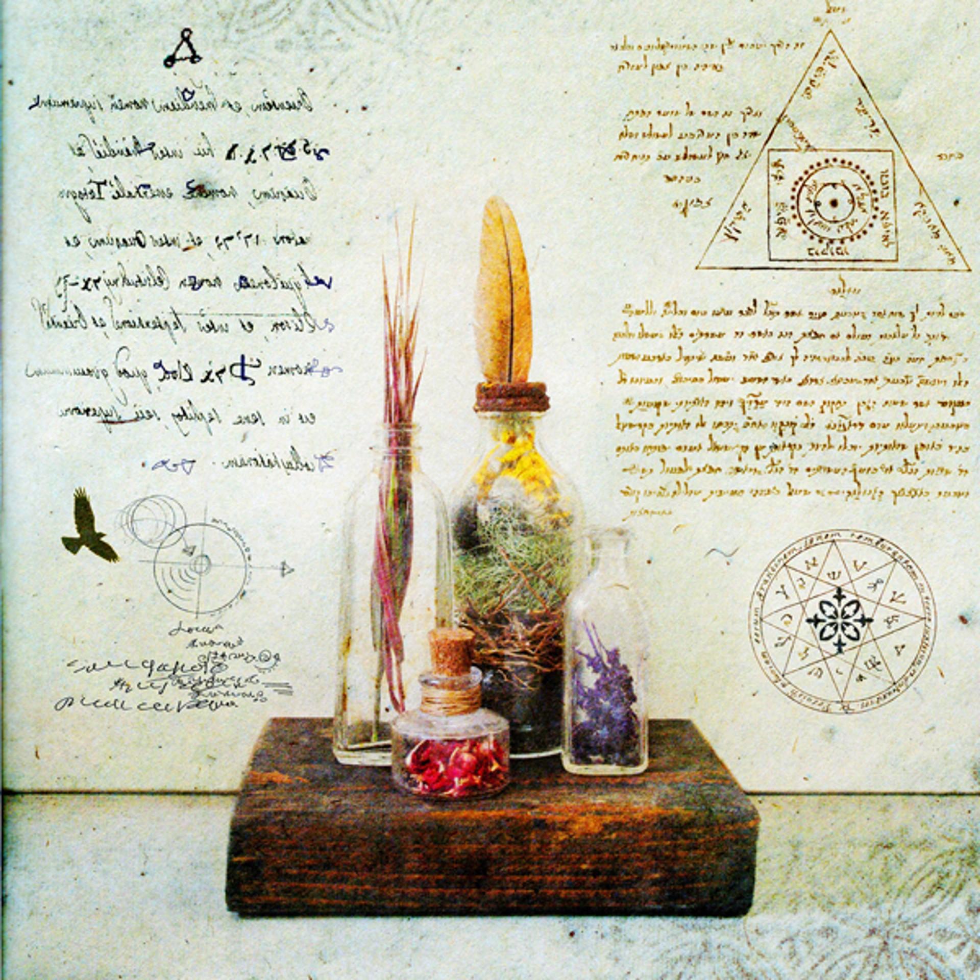 Sacred Herbs by Yuko Ishii