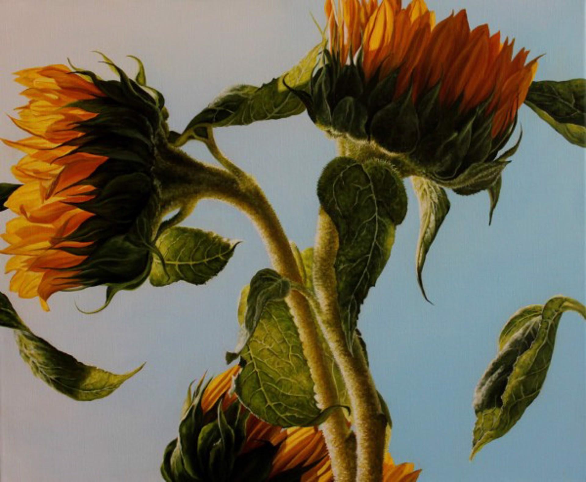 Reaching for the Sun by Loren DiBenedetto