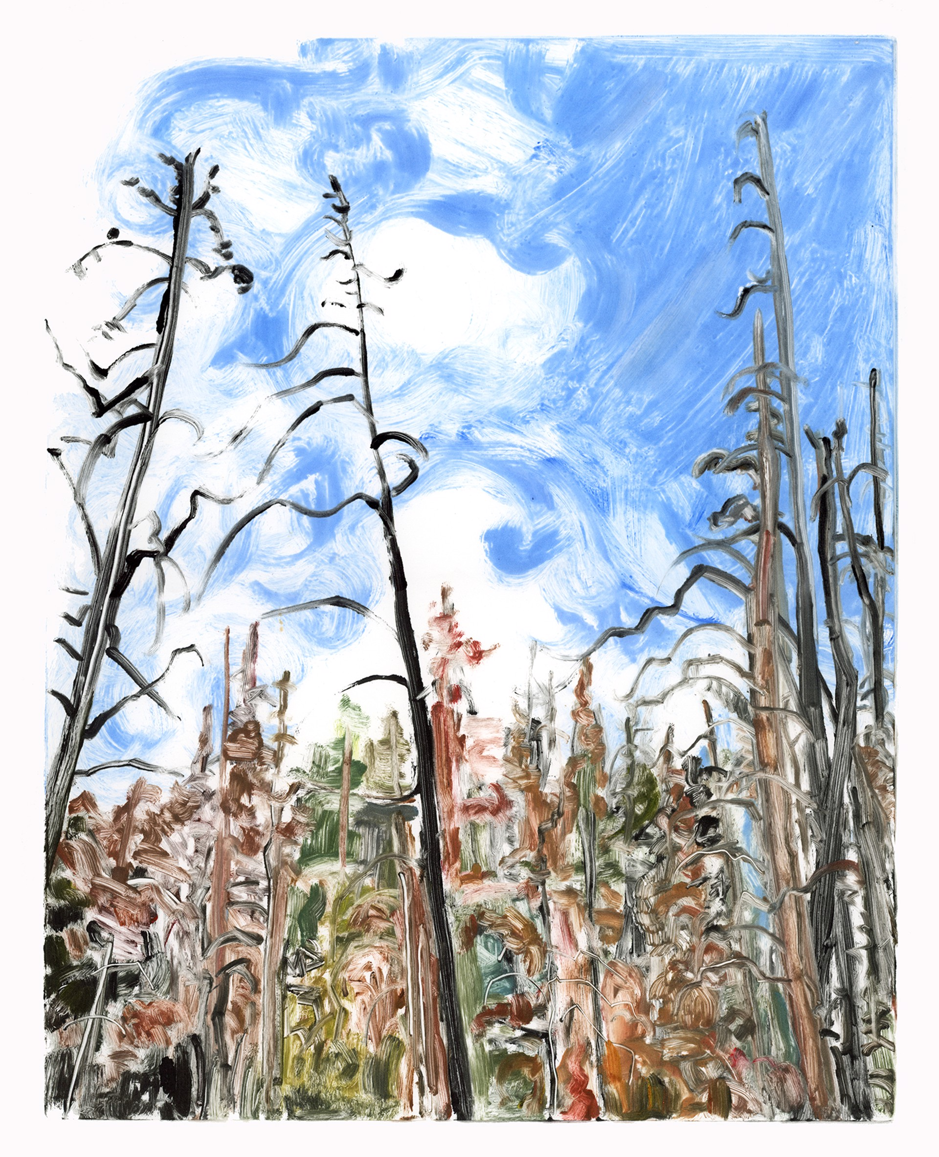 Blue Sky, Beetle Kill by Ivy Hickam