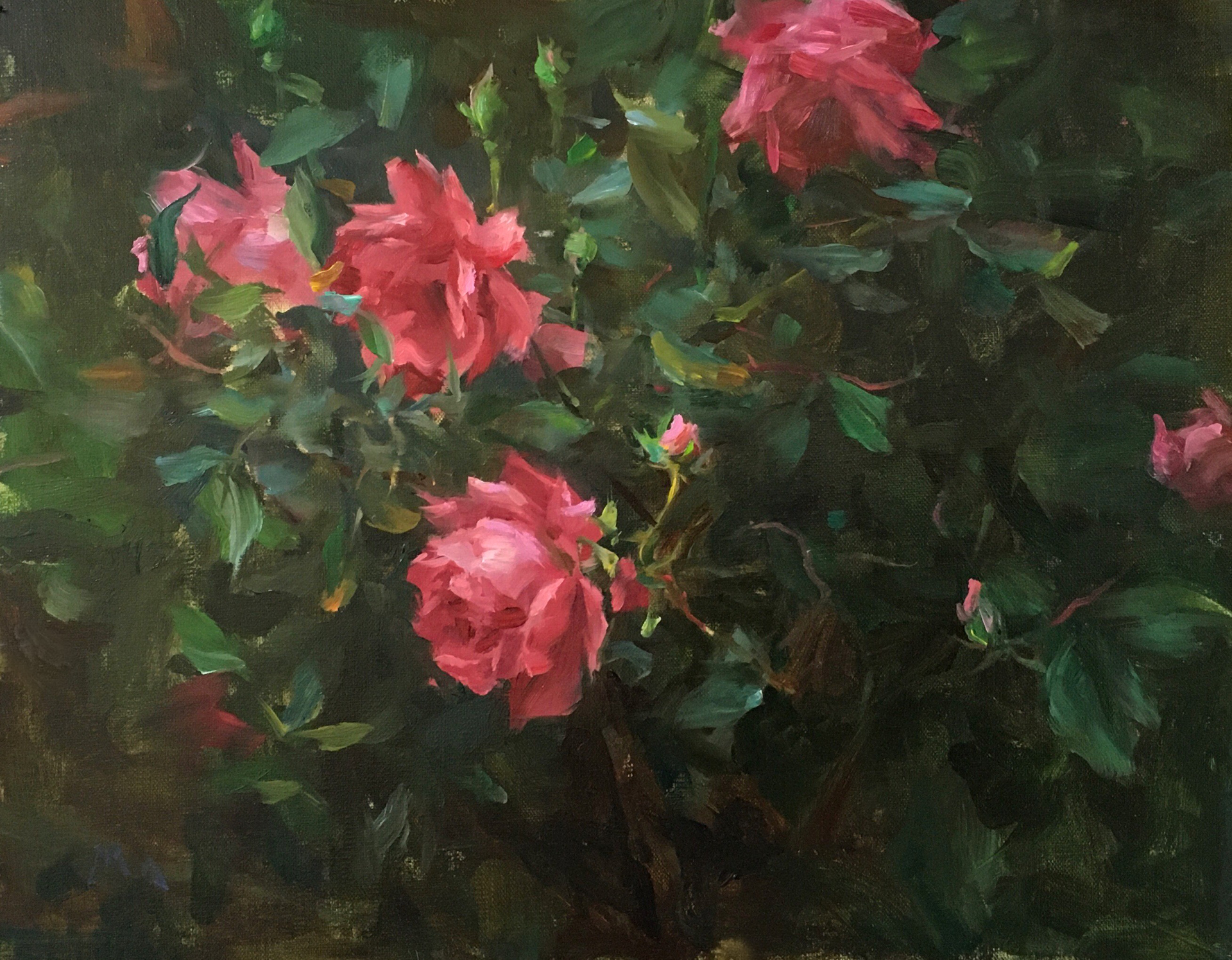 Knockout Roses by Kyle Ma