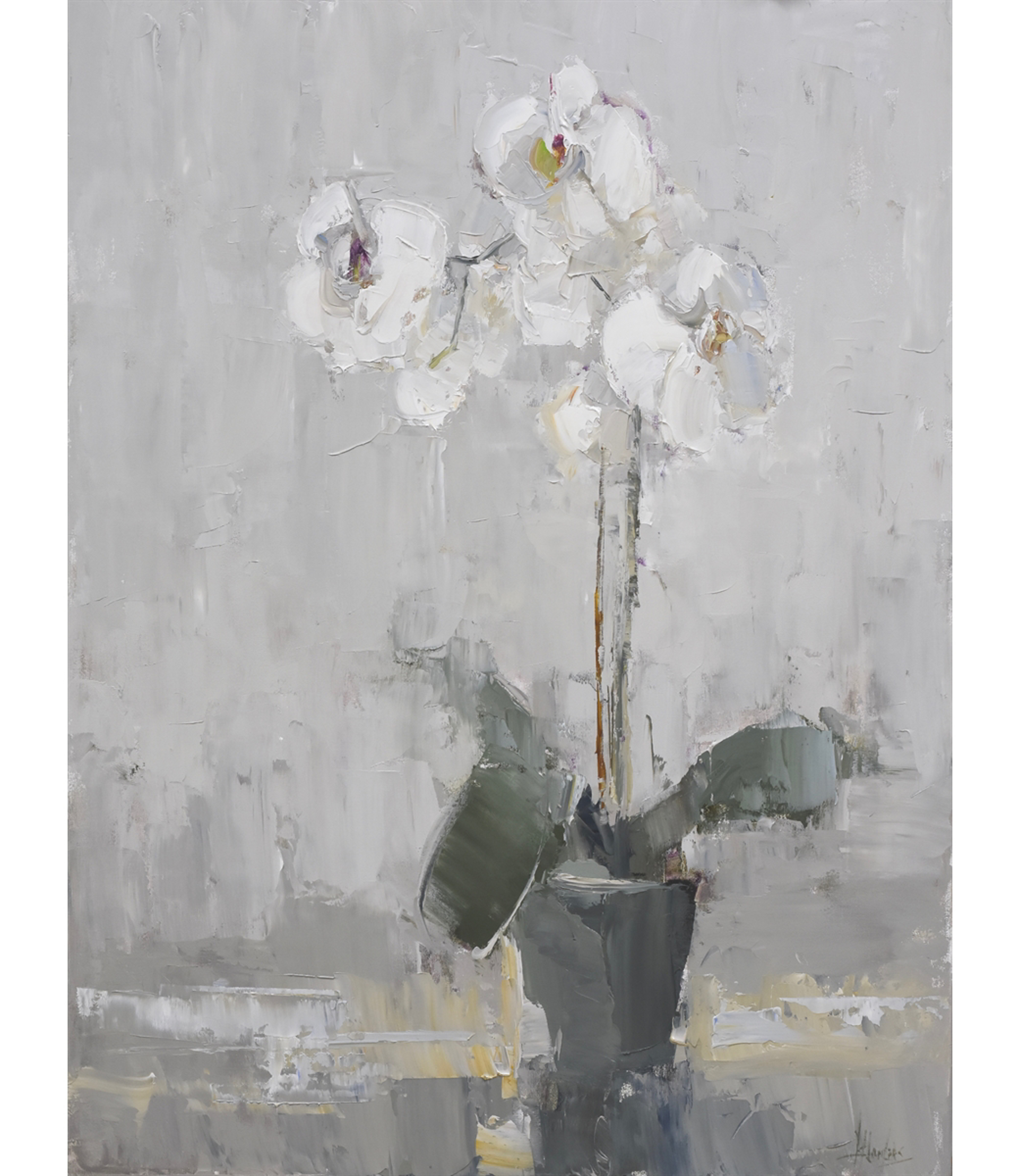 Orchid in White Room by Barbara Flowers