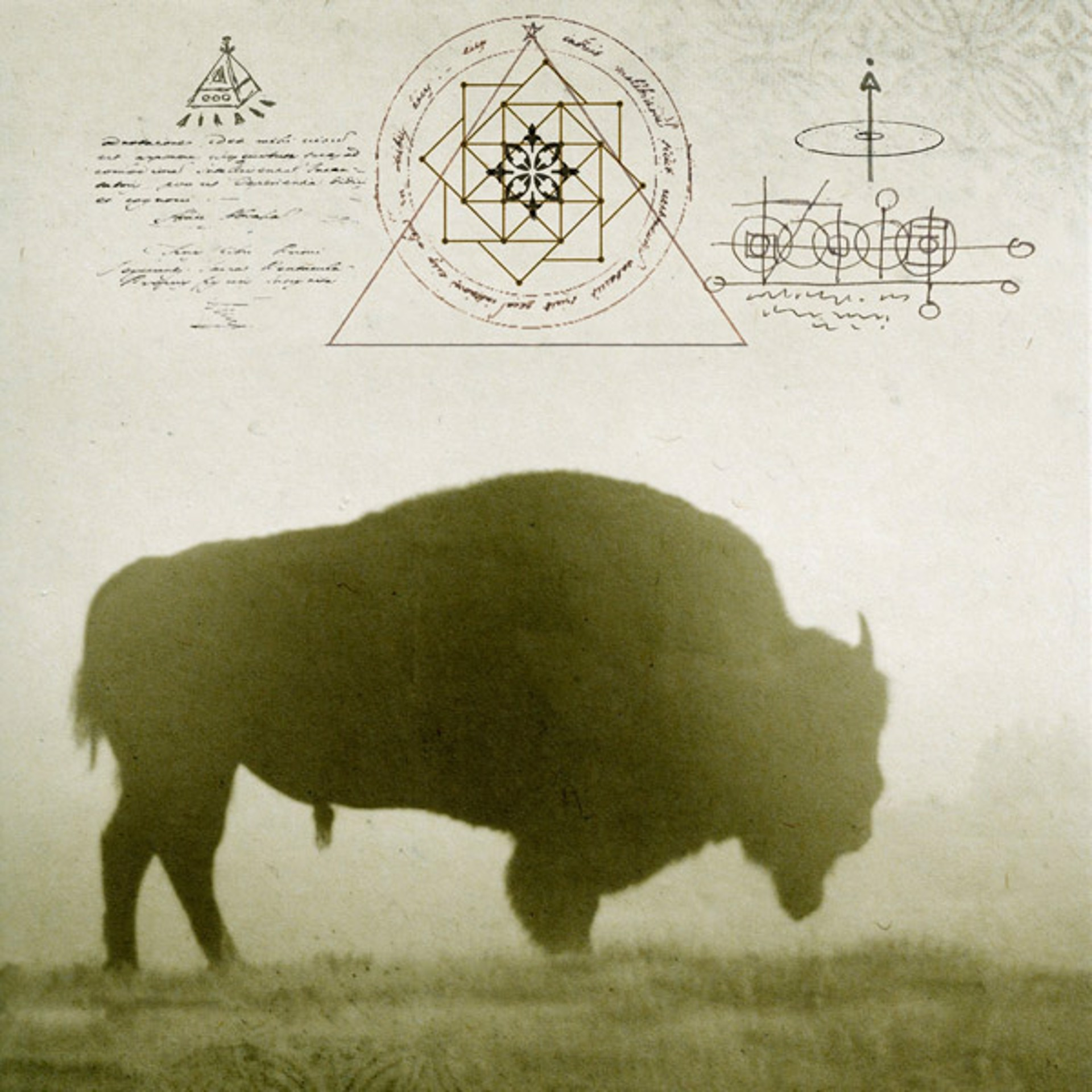 Healing Bison in Yellowstone by Yuko Ishii