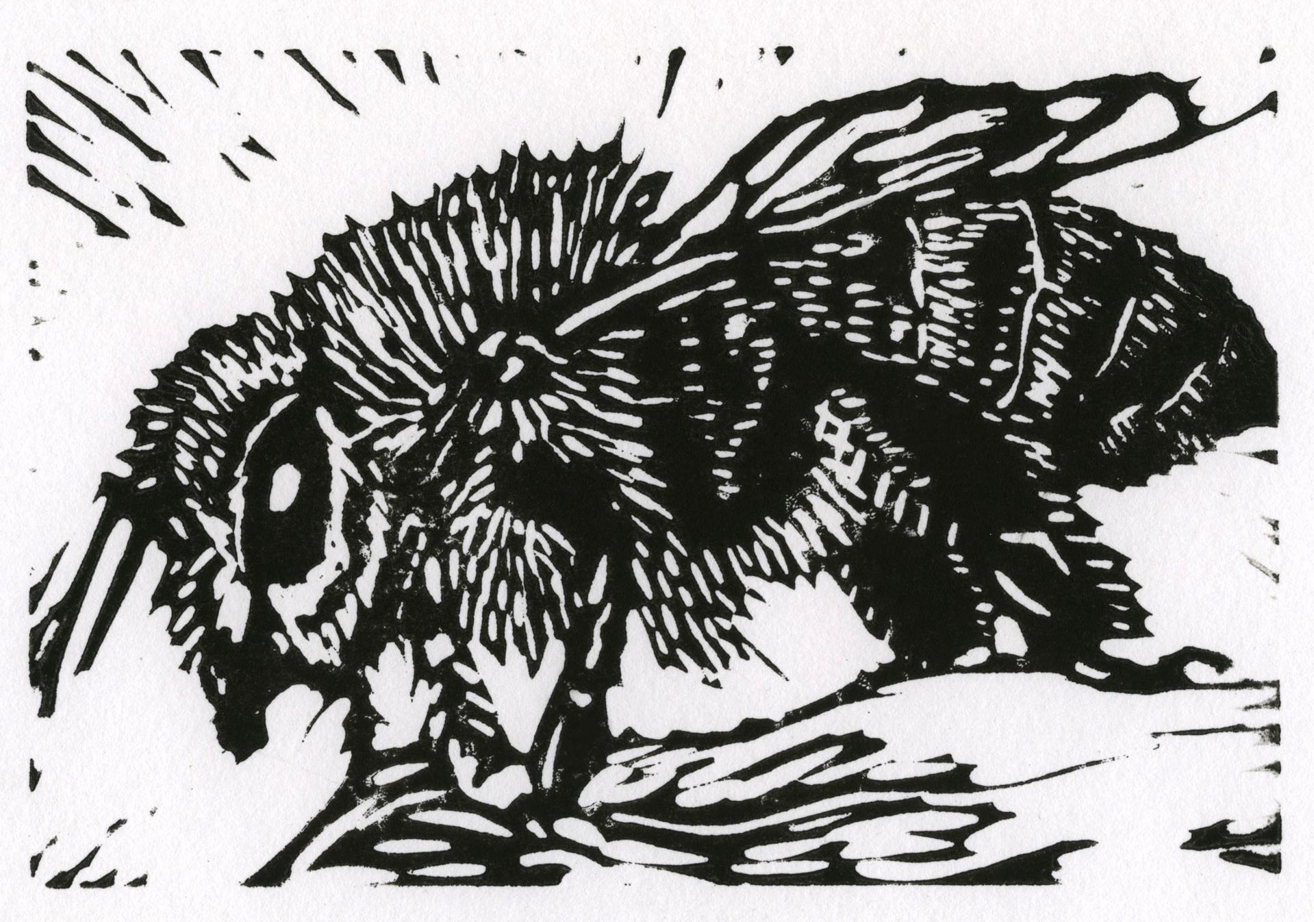 Honey Bee by Allison Hull