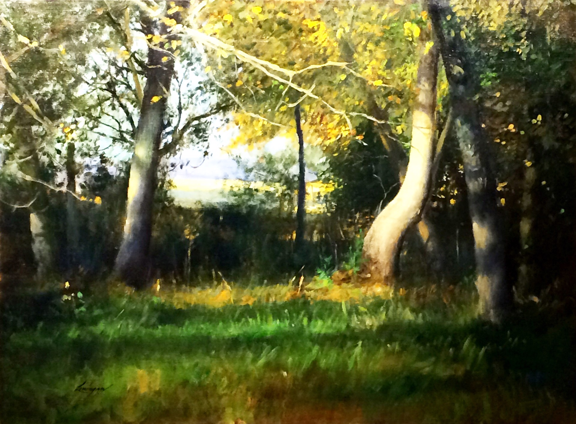 Morning in the Woods by John Lonergan