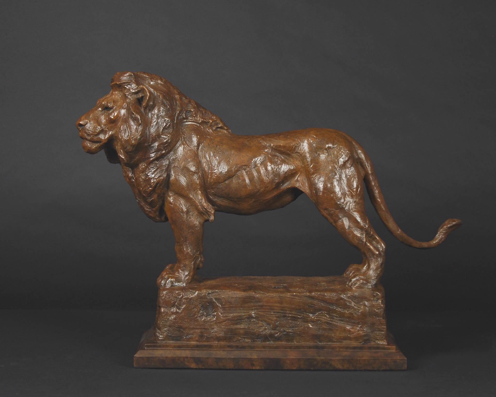 Bushland King (Lion) by Tim Shinabarger