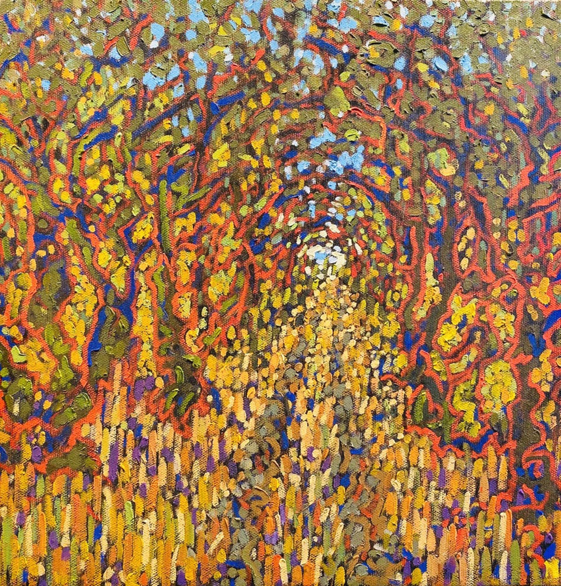 Woods and Path - National Seashore  by Nicholas Peterson-Davis