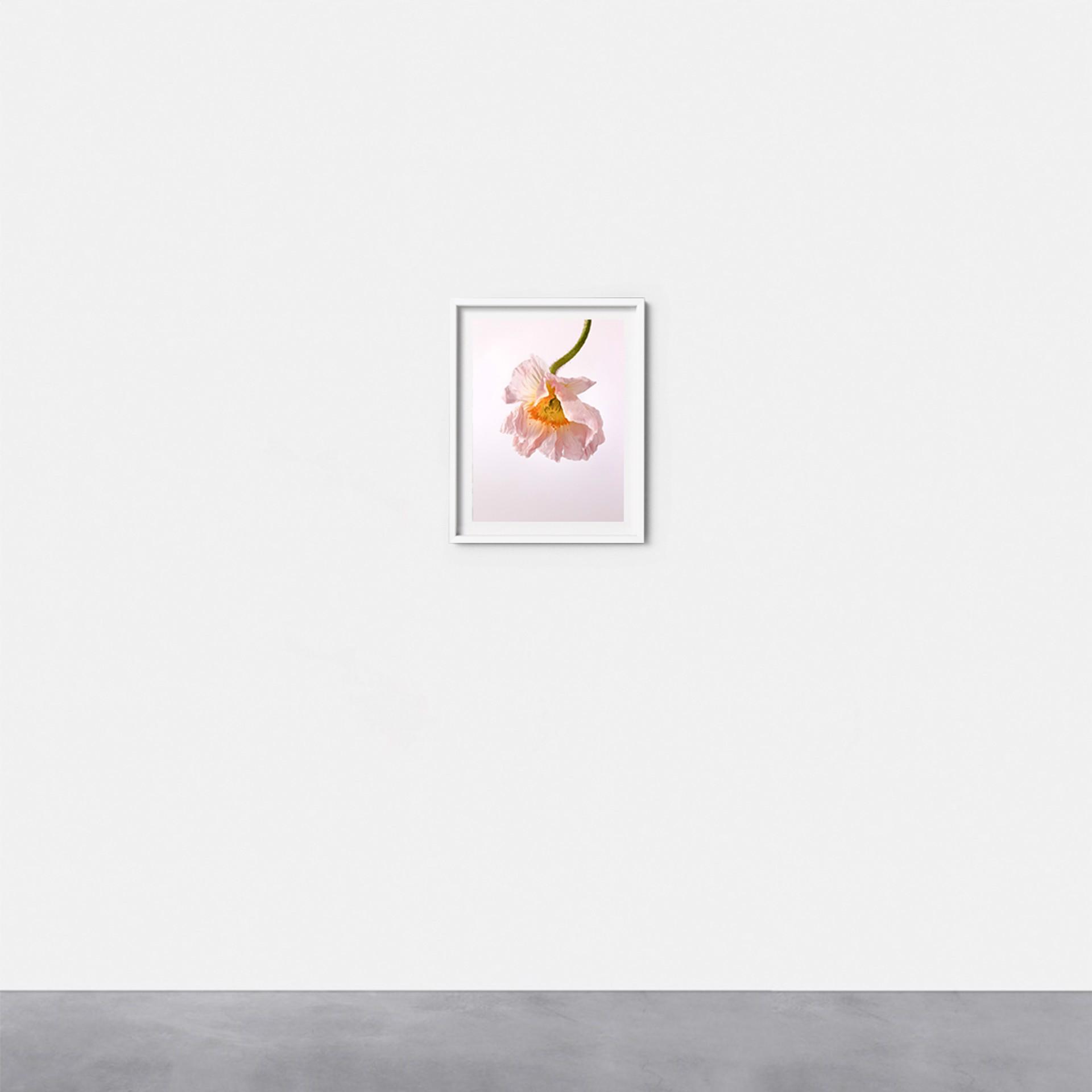 Flower #6 by Gabriella Imperatori-Penn