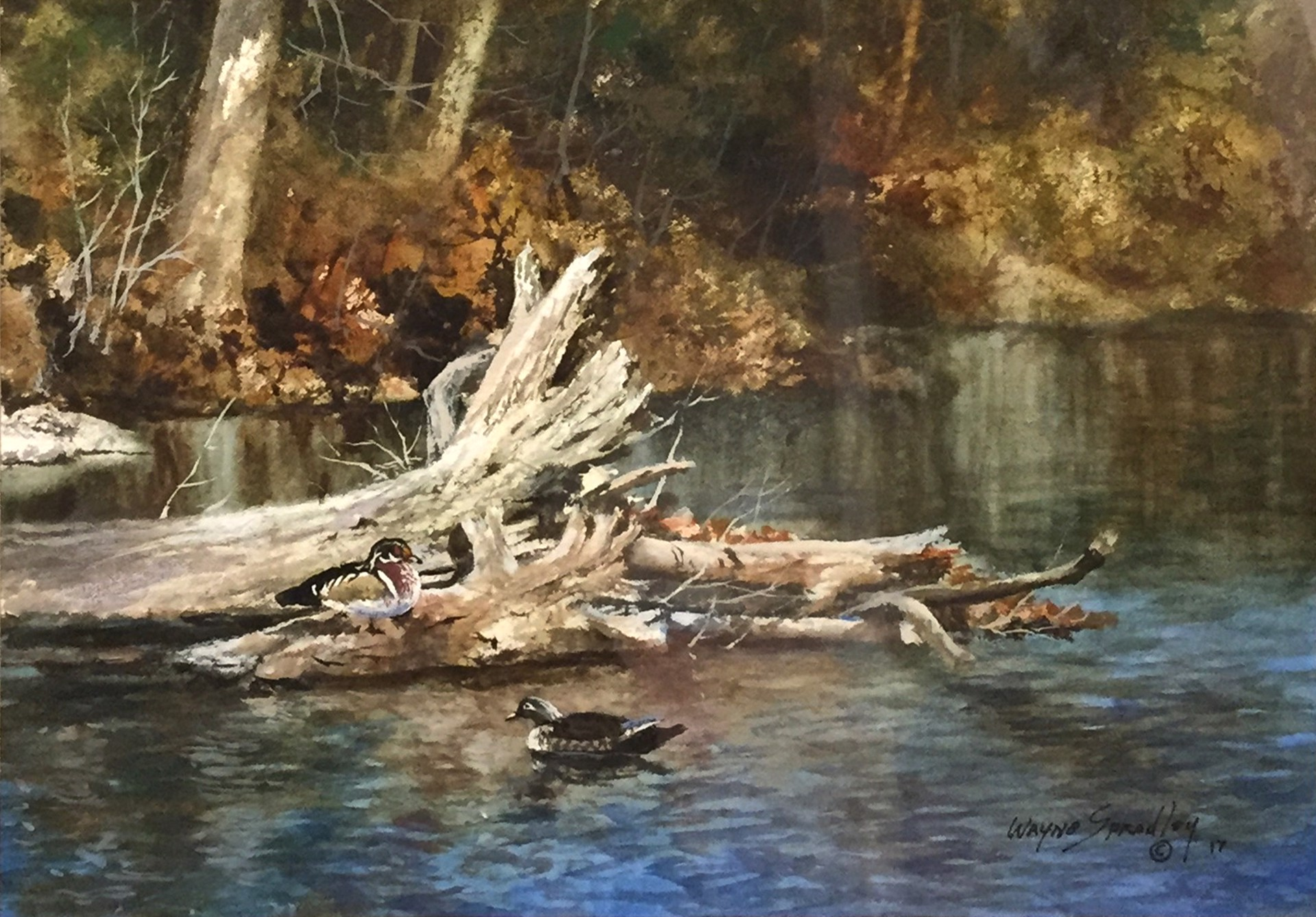 Kelly Creek Drift by Wayne Spradley