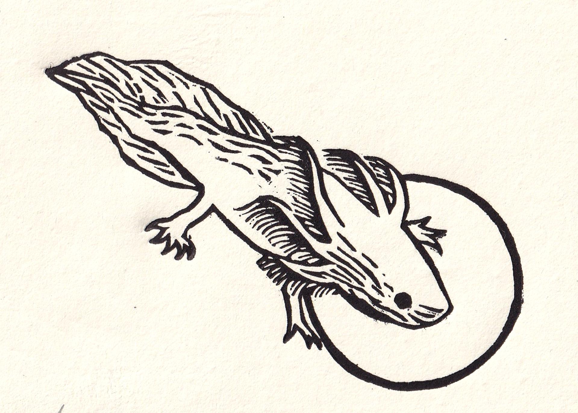 Salamandra by Miguel Jimenez Martinez