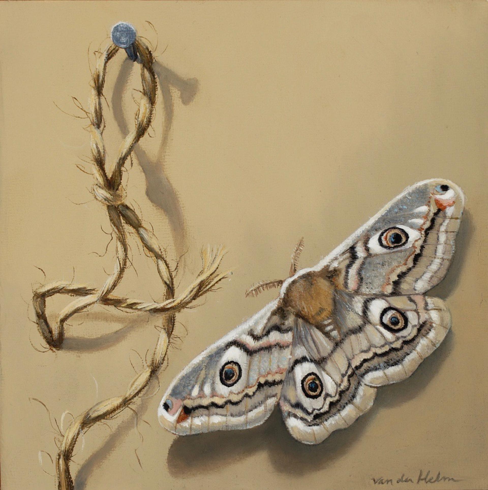 Emporer Moth by Sarah van der Helm