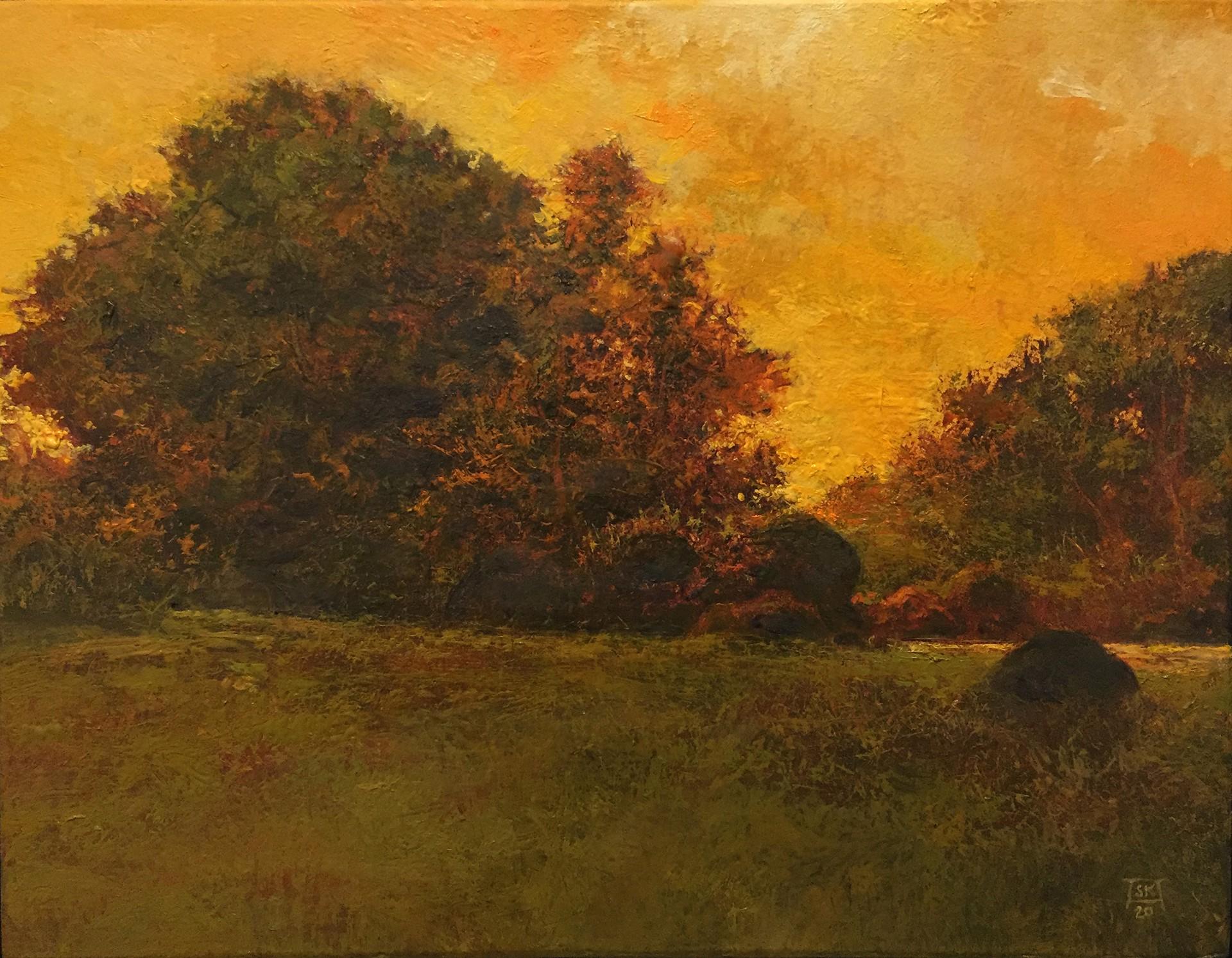 Evening (Millpond) by Shawn Krueger