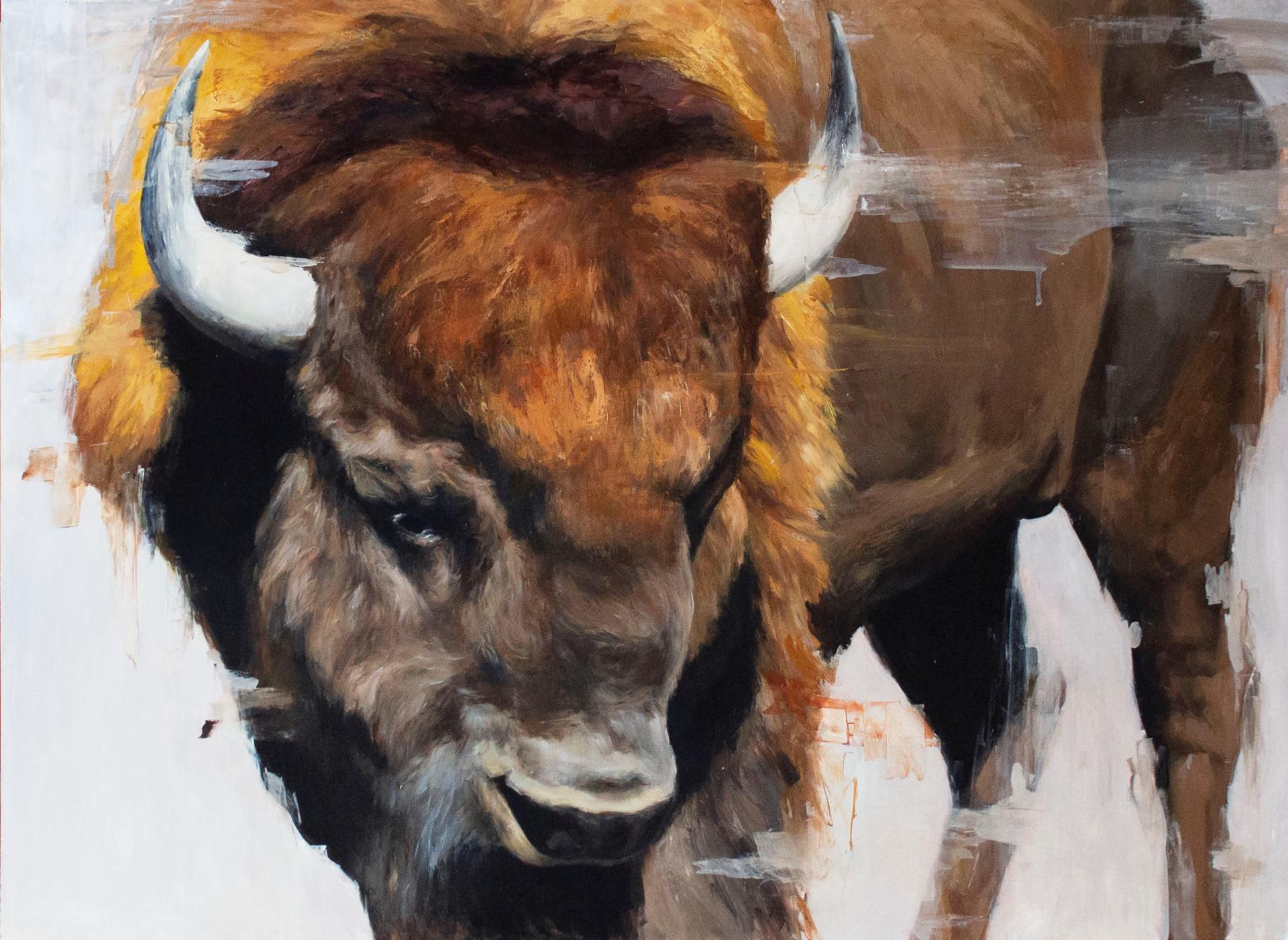 Hayden Valley Bison by Morgan Cameron