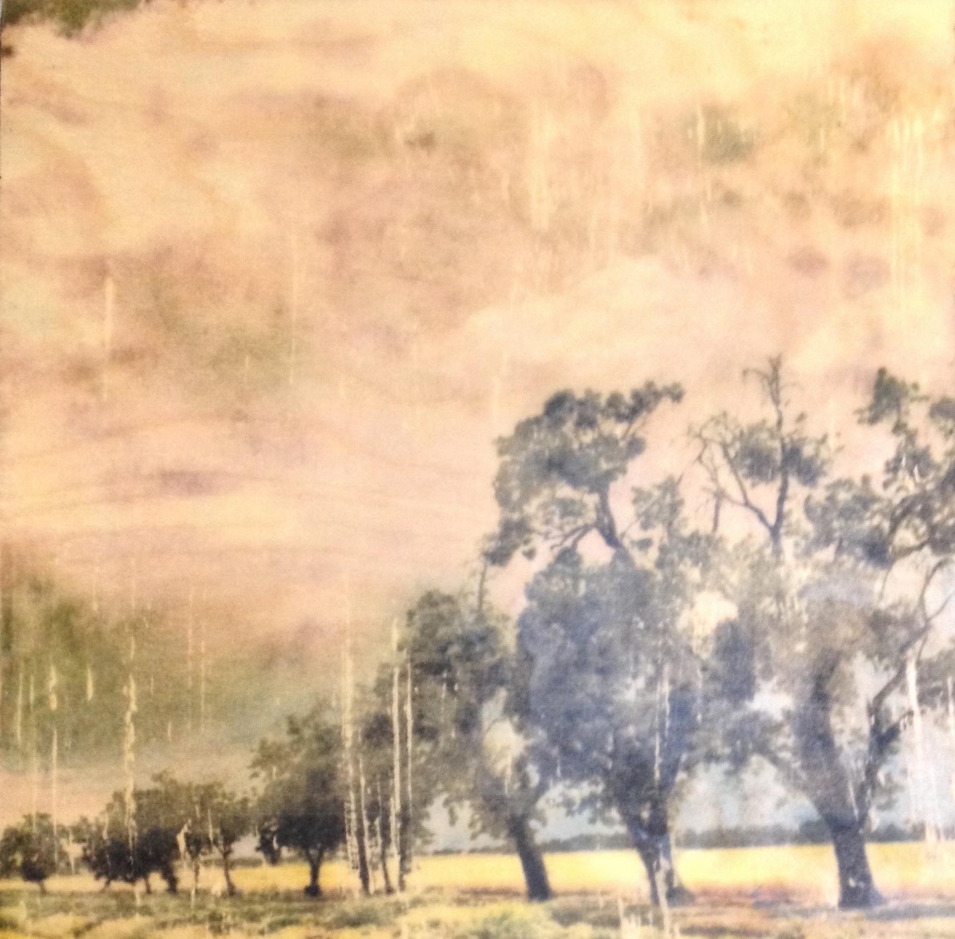 Oak Alle by Cecilia Fransson