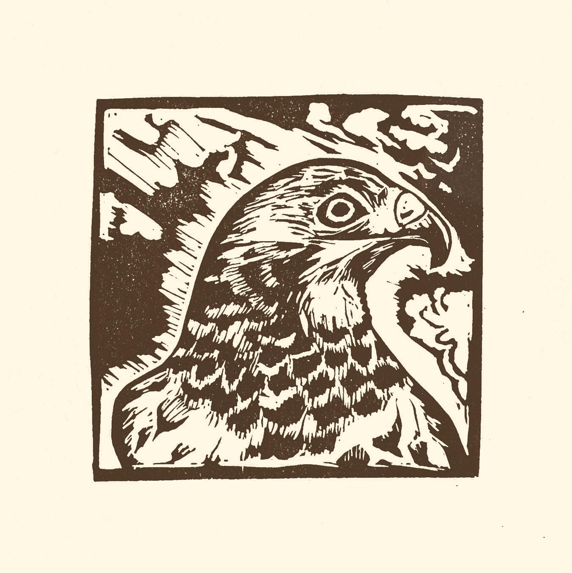 Cricket the Swainson's Hawk by Kat Kinnick