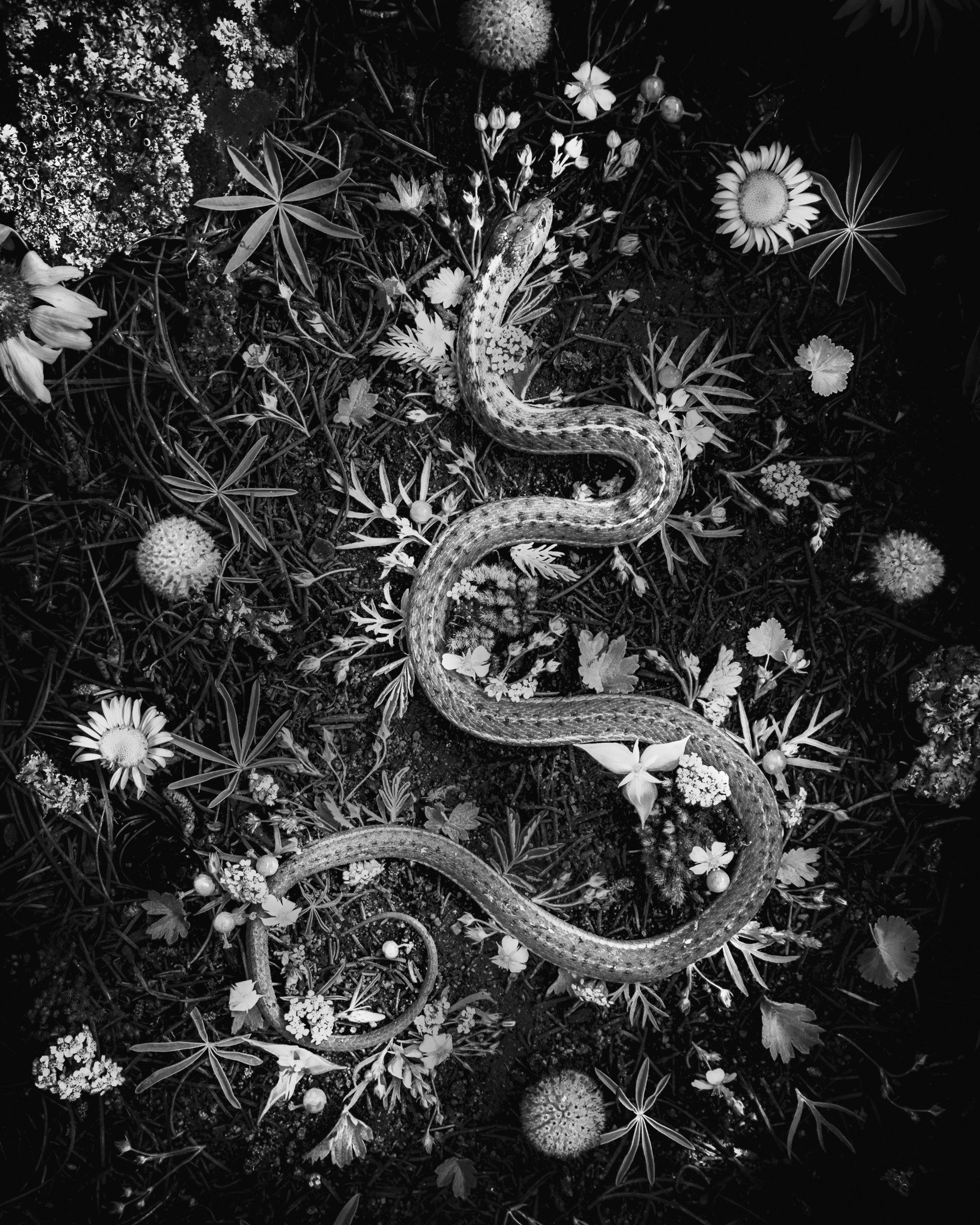 Snake by Jenya Chernoff