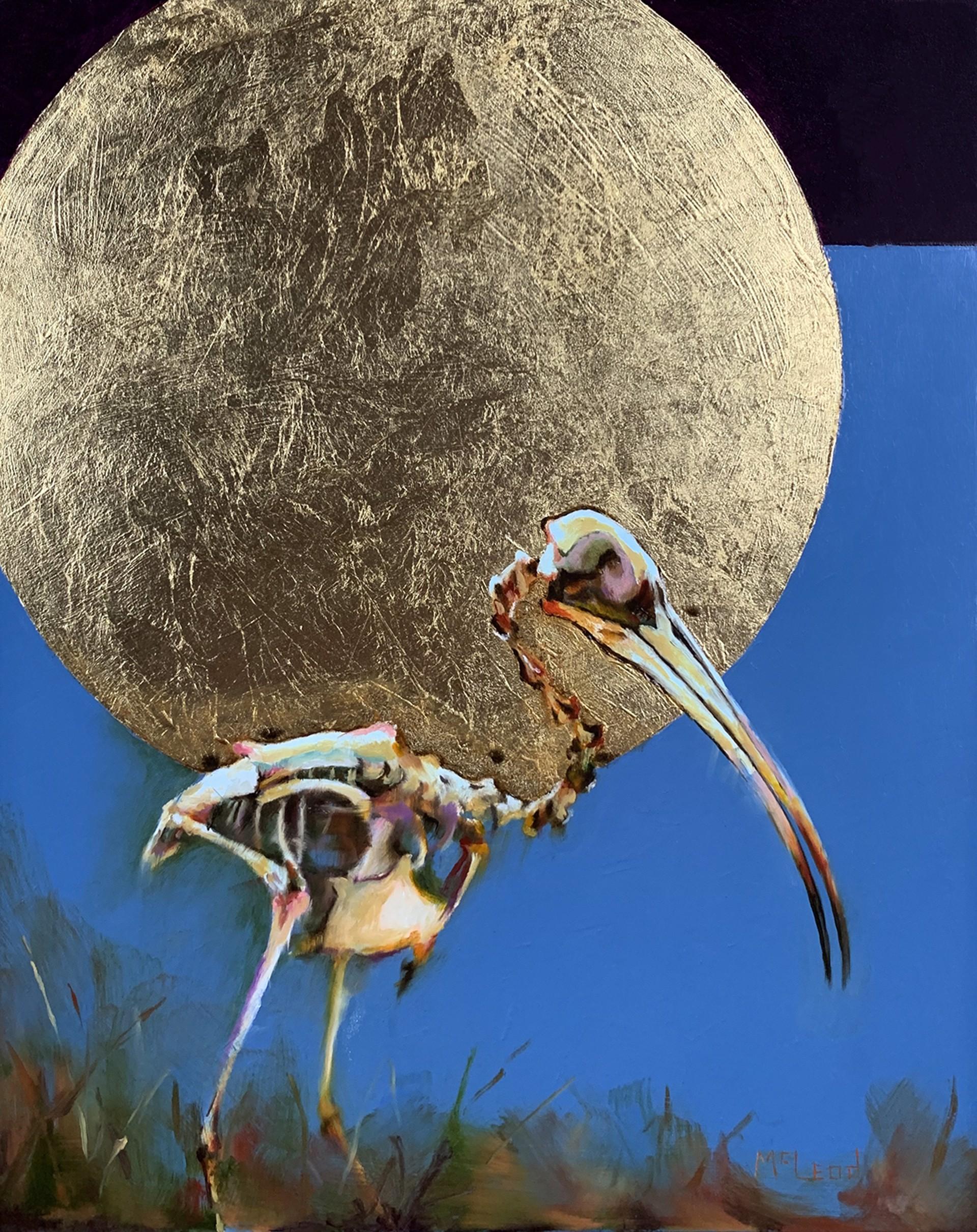Ibis by John McLeod