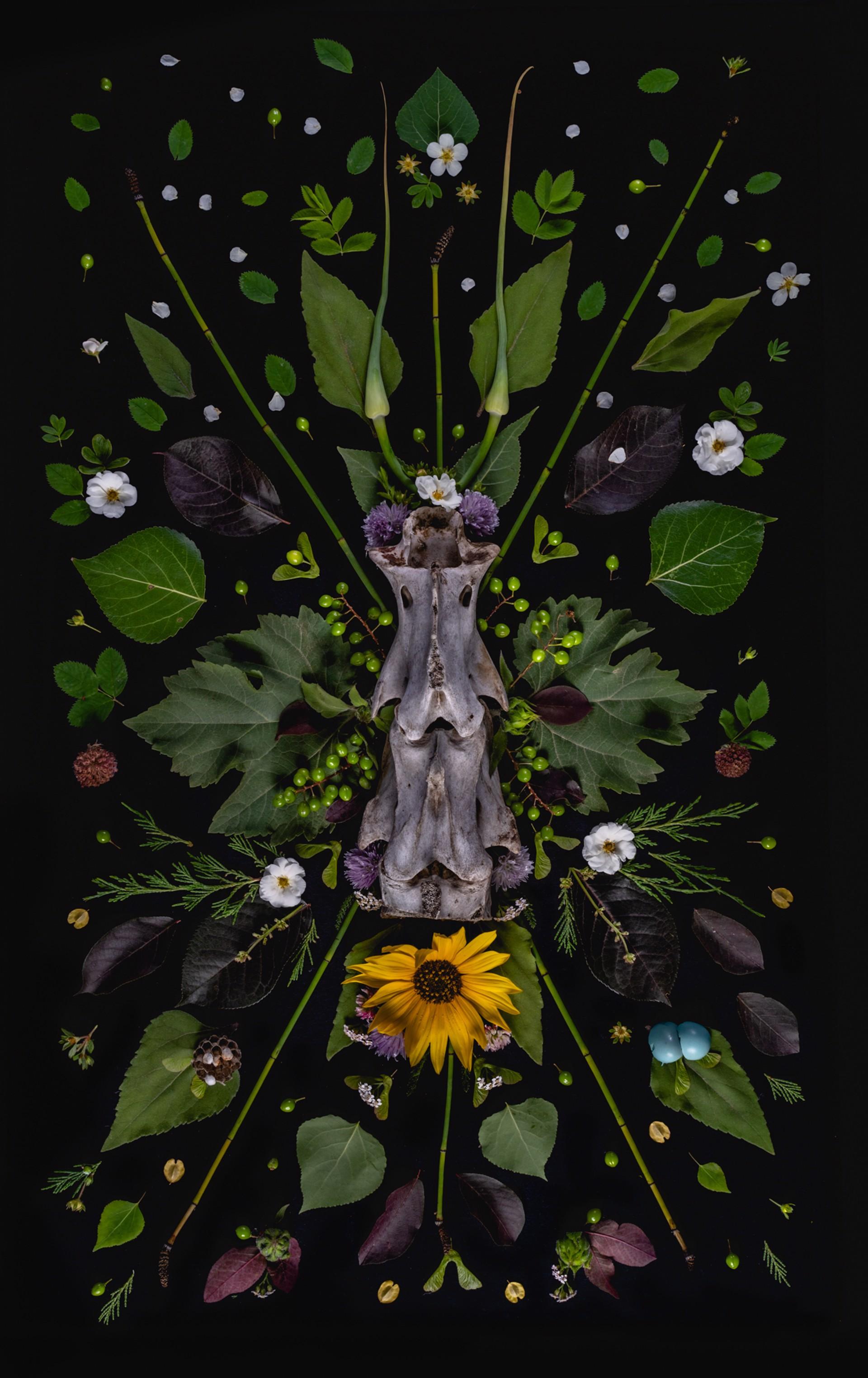 Totem by Jenya Chernoff