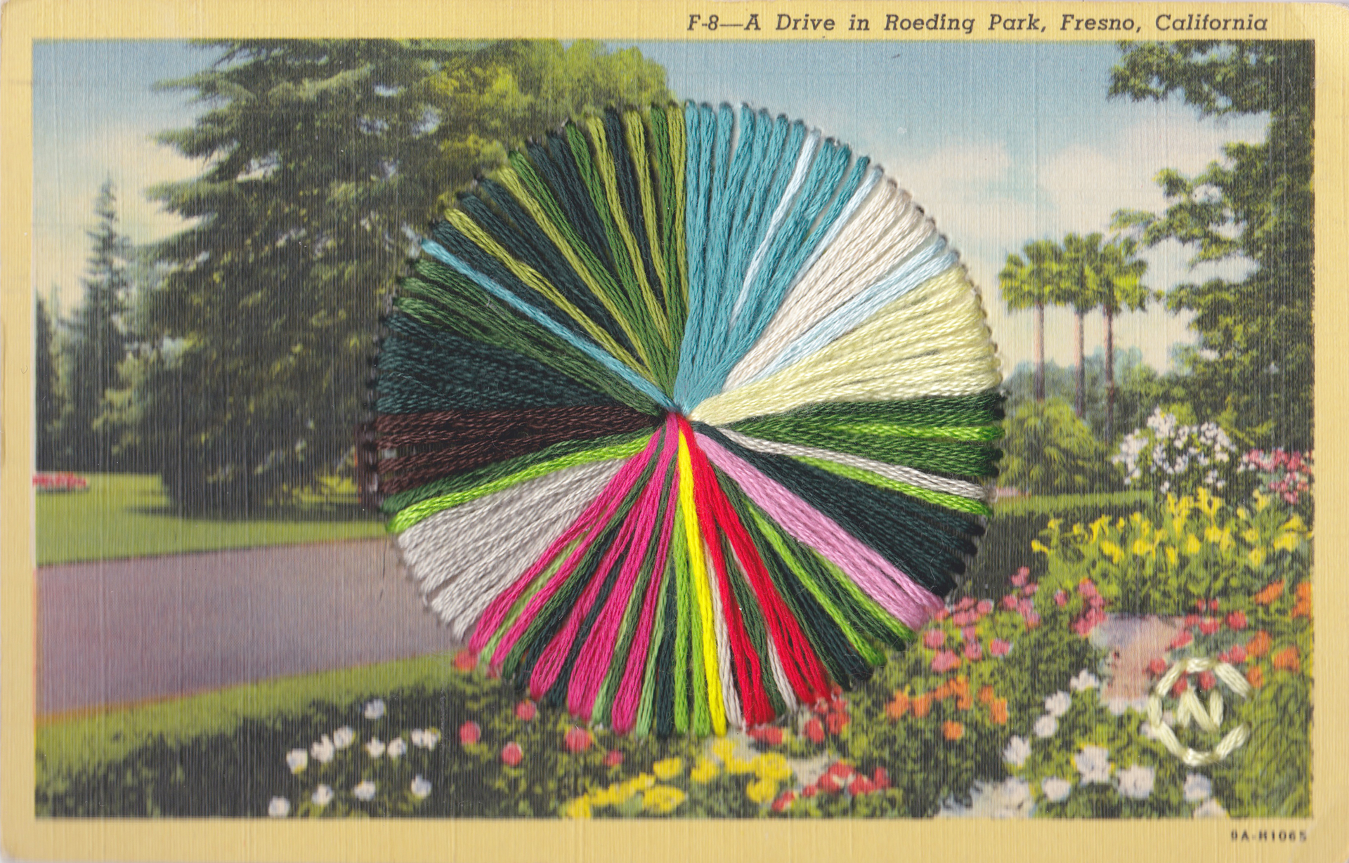 A Drive in Roeding Park by Natalie Ciccoricco