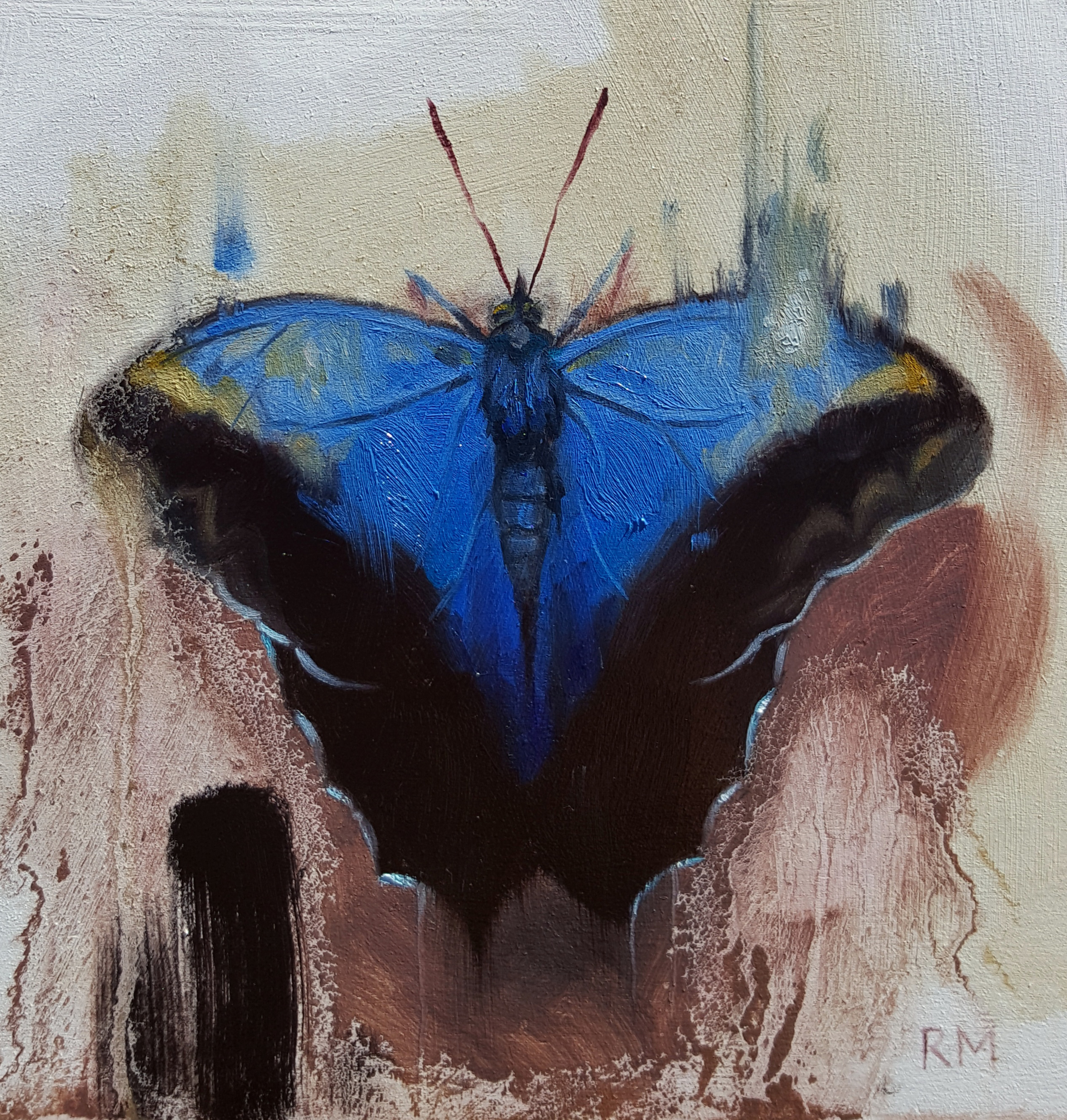 Butterfly 1 by Ryan Morse