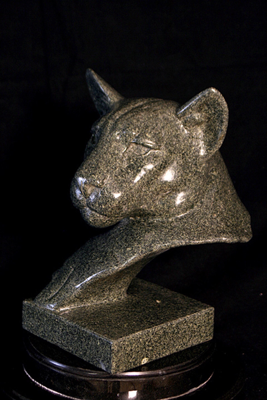 Cougar In Grey by Melvin Johansen
