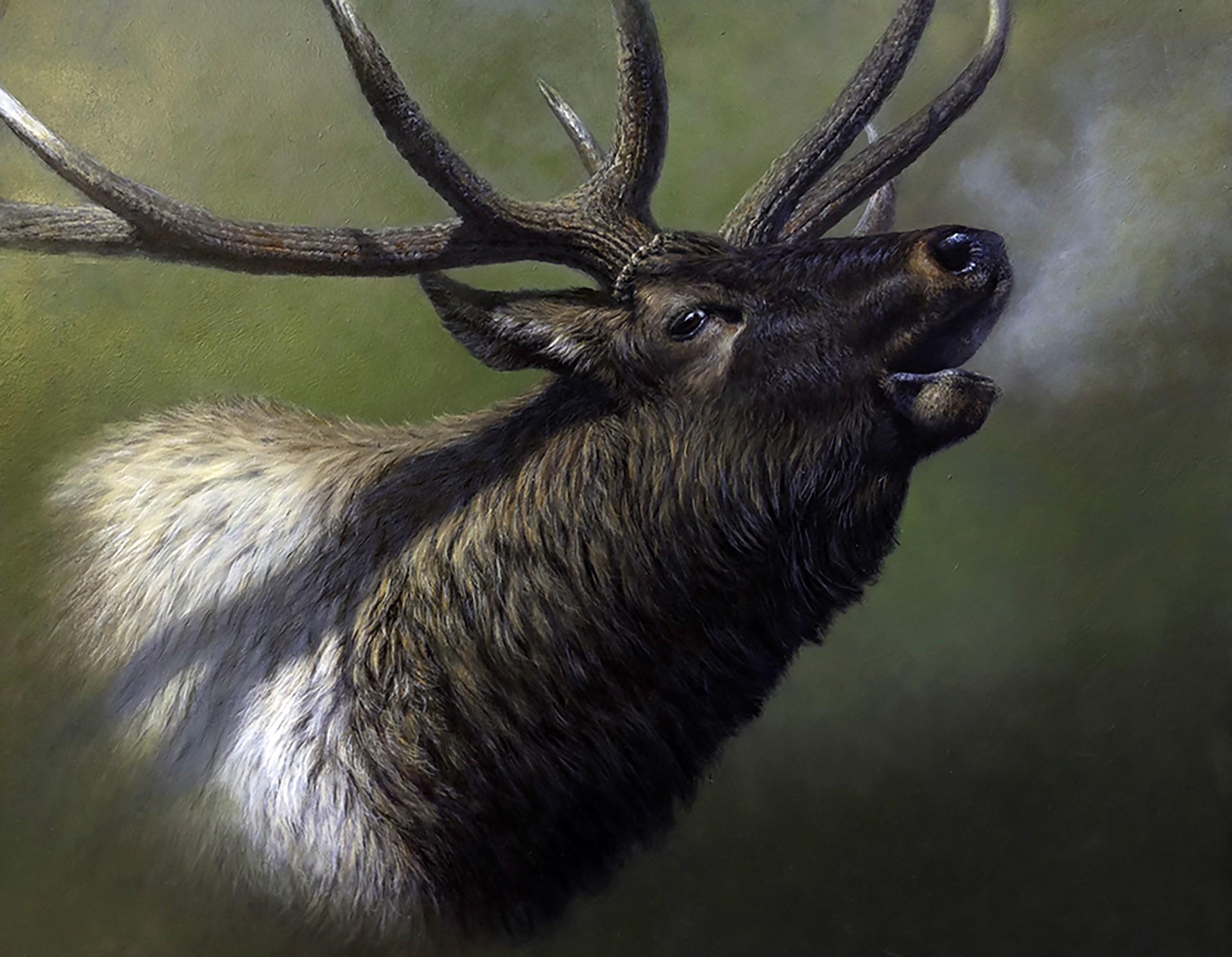 Elk by Oscar Campos