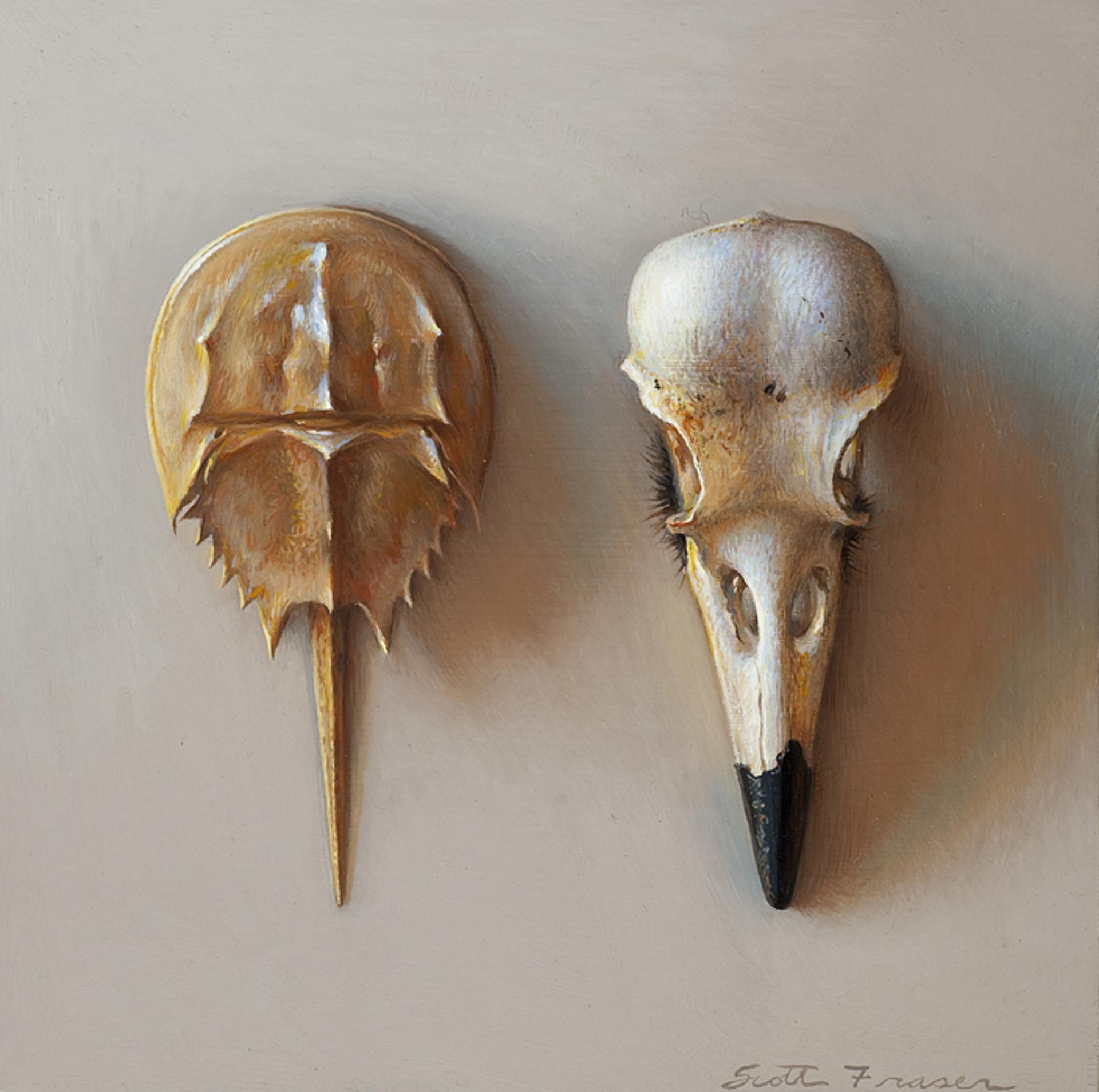 Skull and Crabshell by Scott Fraser