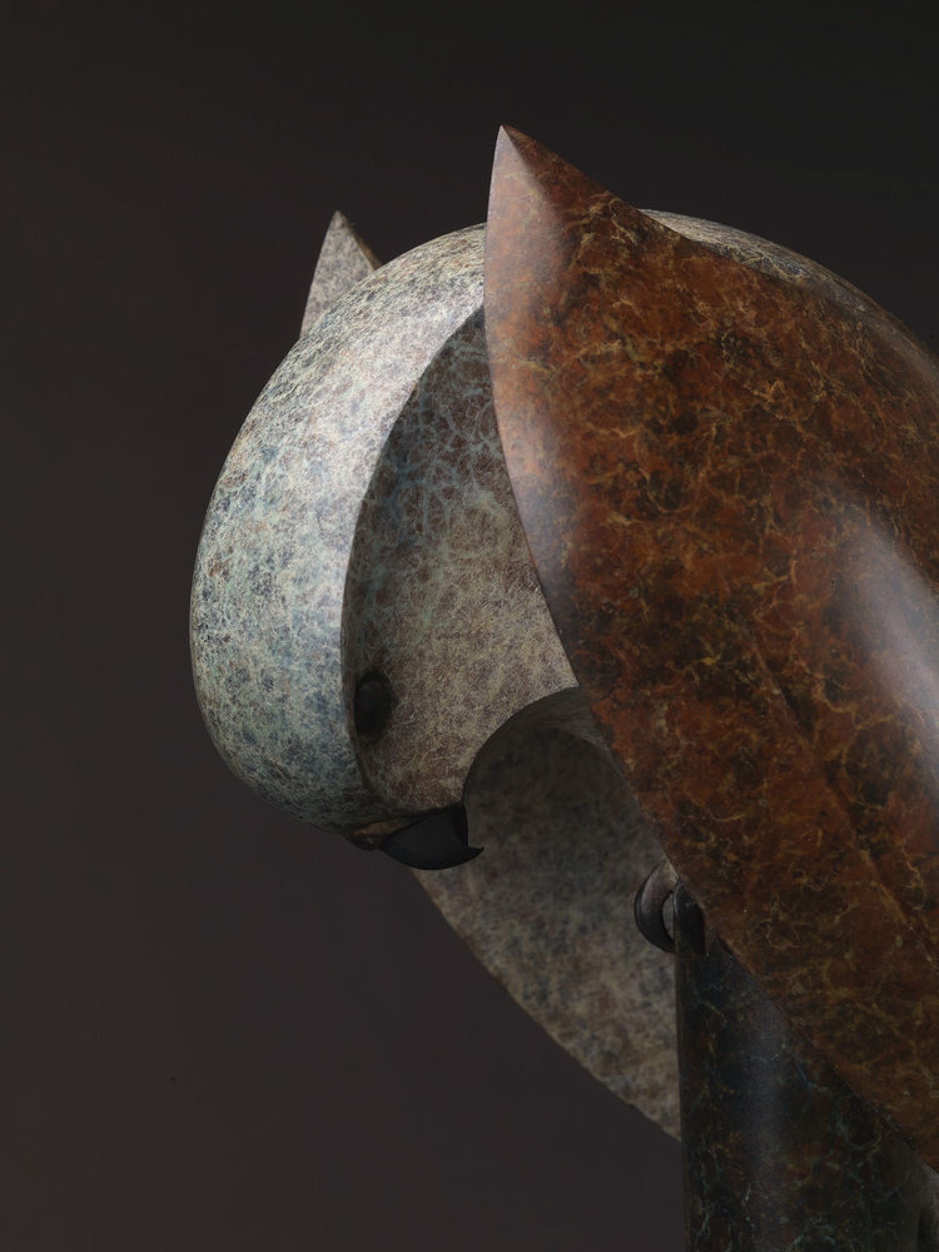 Kestrel by Paul Harvey