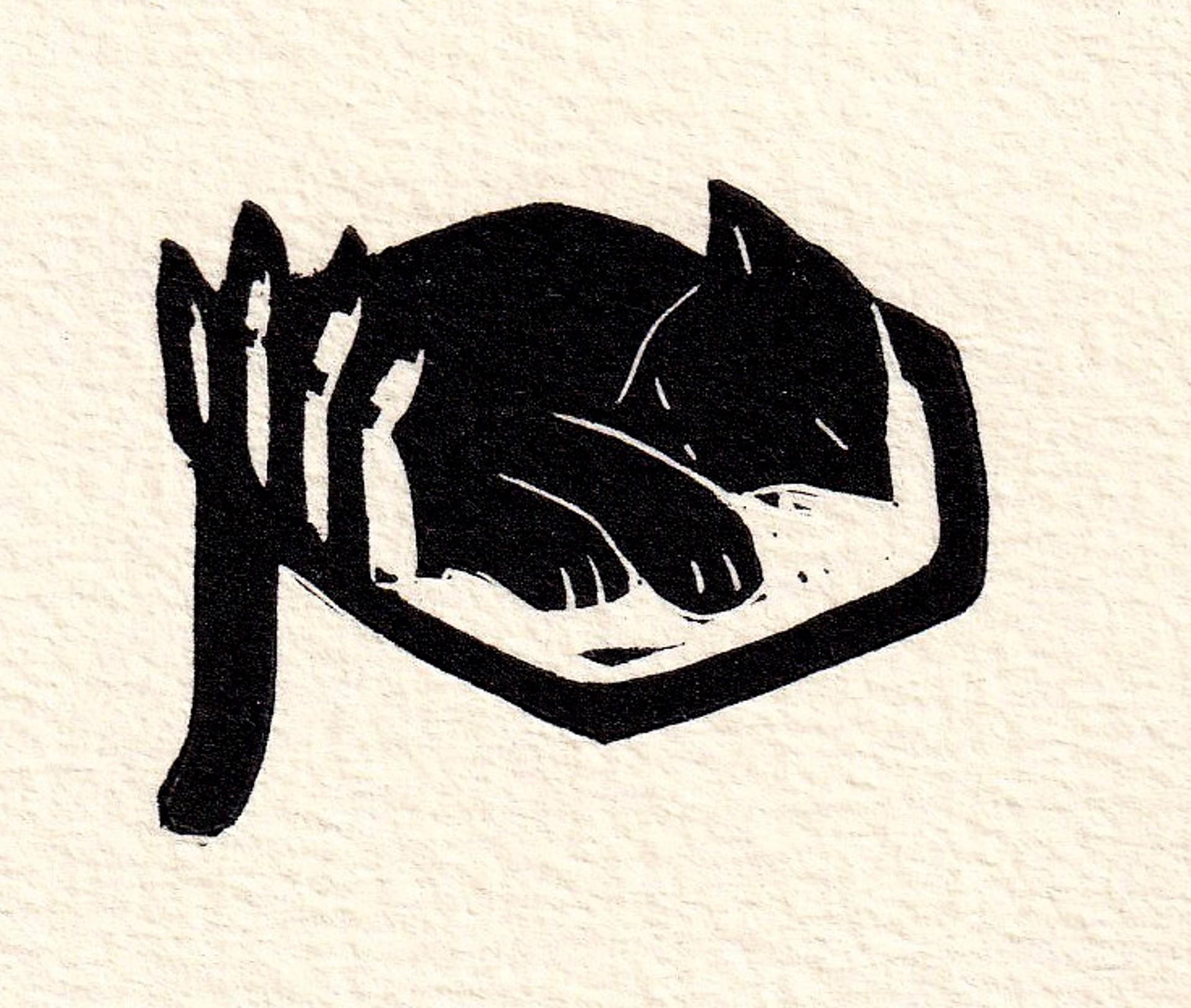 Gato Durmiendo en Mano by Alberto Cruz