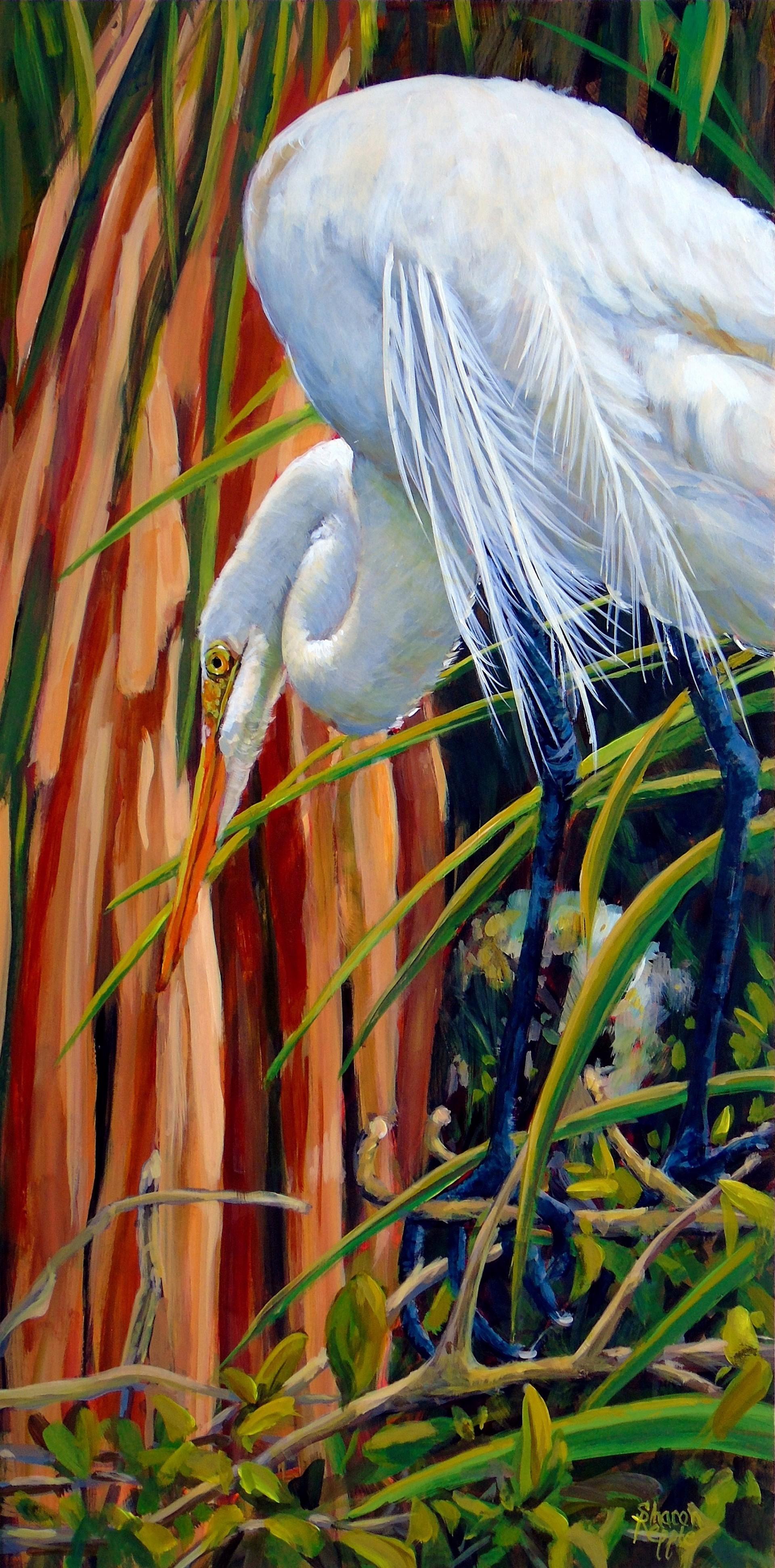 Great White Egret - Alligator Farm by Sharon Repple