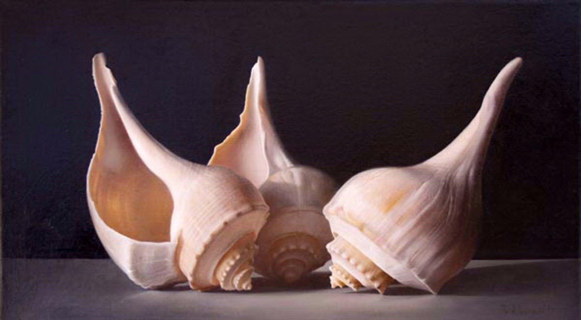 Sea Shell Trio by Tatyana Klevenskiy