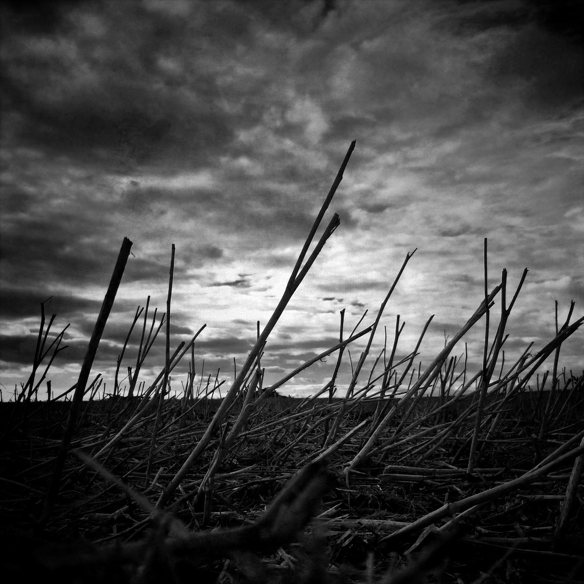 Barren by Allan Bailey