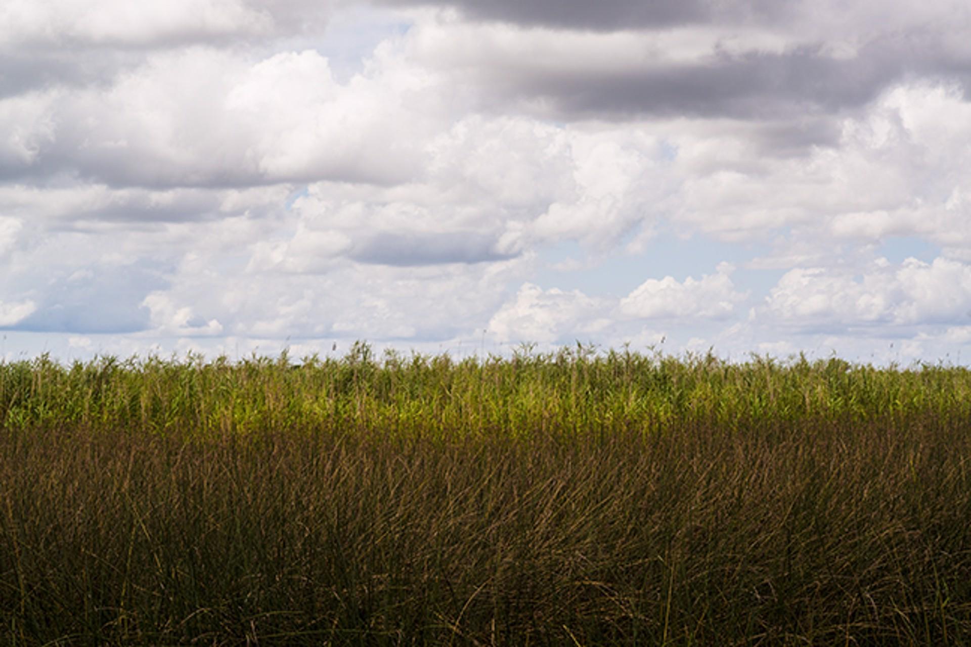 On the Inland Waterway Louisiana by Frank Sherwood White
