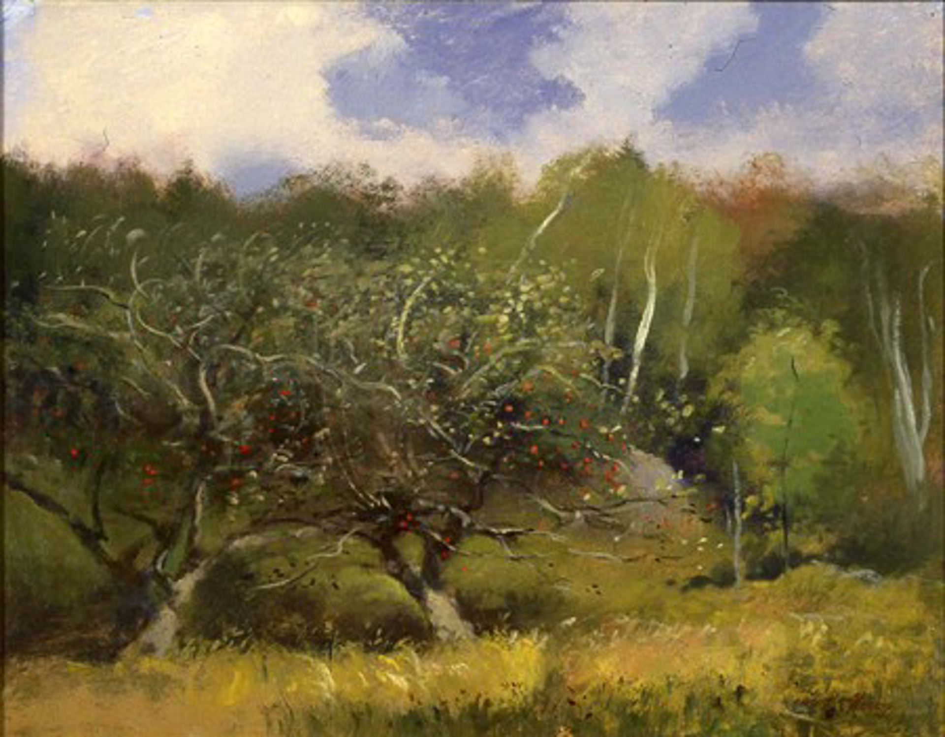 Apple Orchard, Peacham, VT by Frank Mason (1921 - 2009)