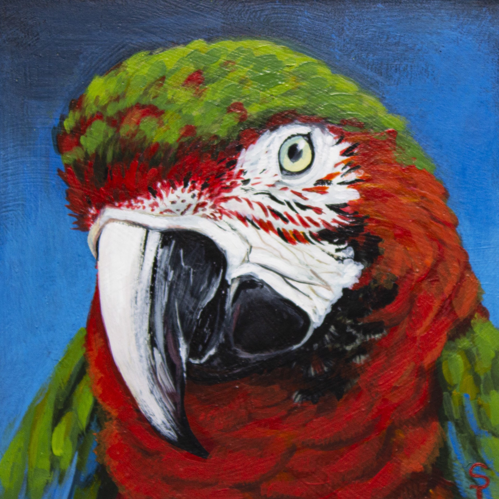 Red Macaw by Sophy Tuttle