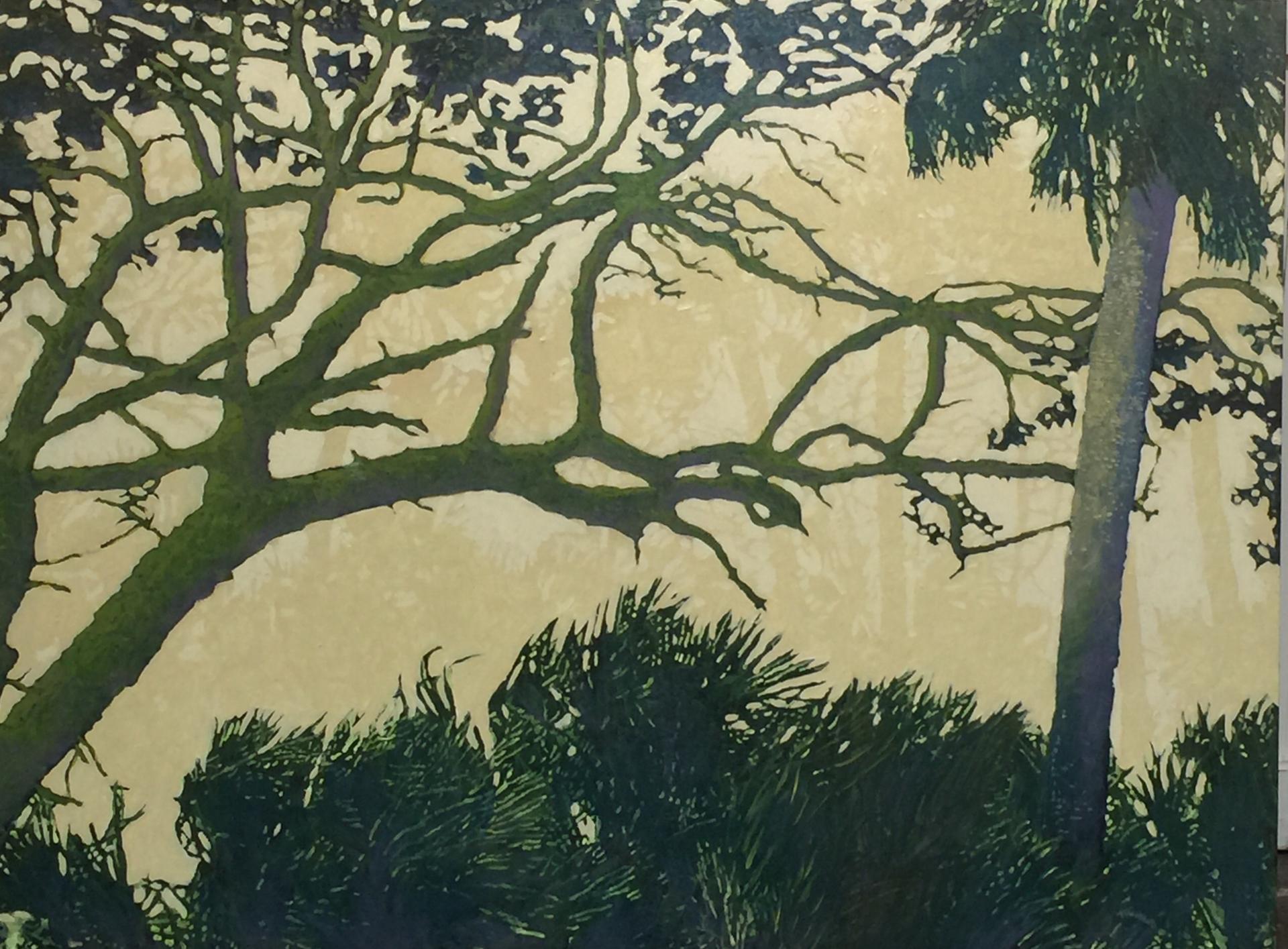 Botany Bay Twisted Live Oak by John Townsend