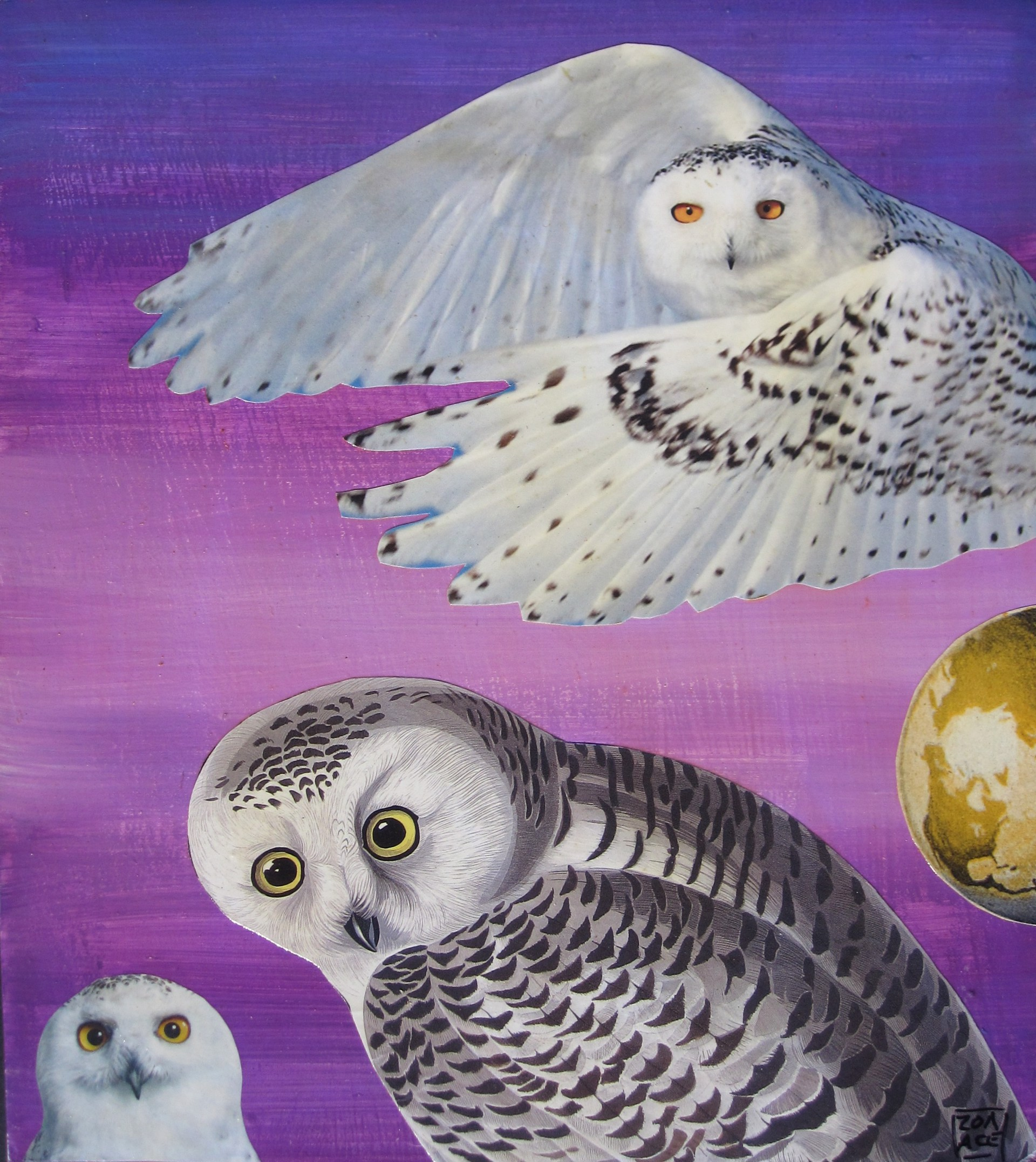 Whoo Knows...? by Zoa Ace
