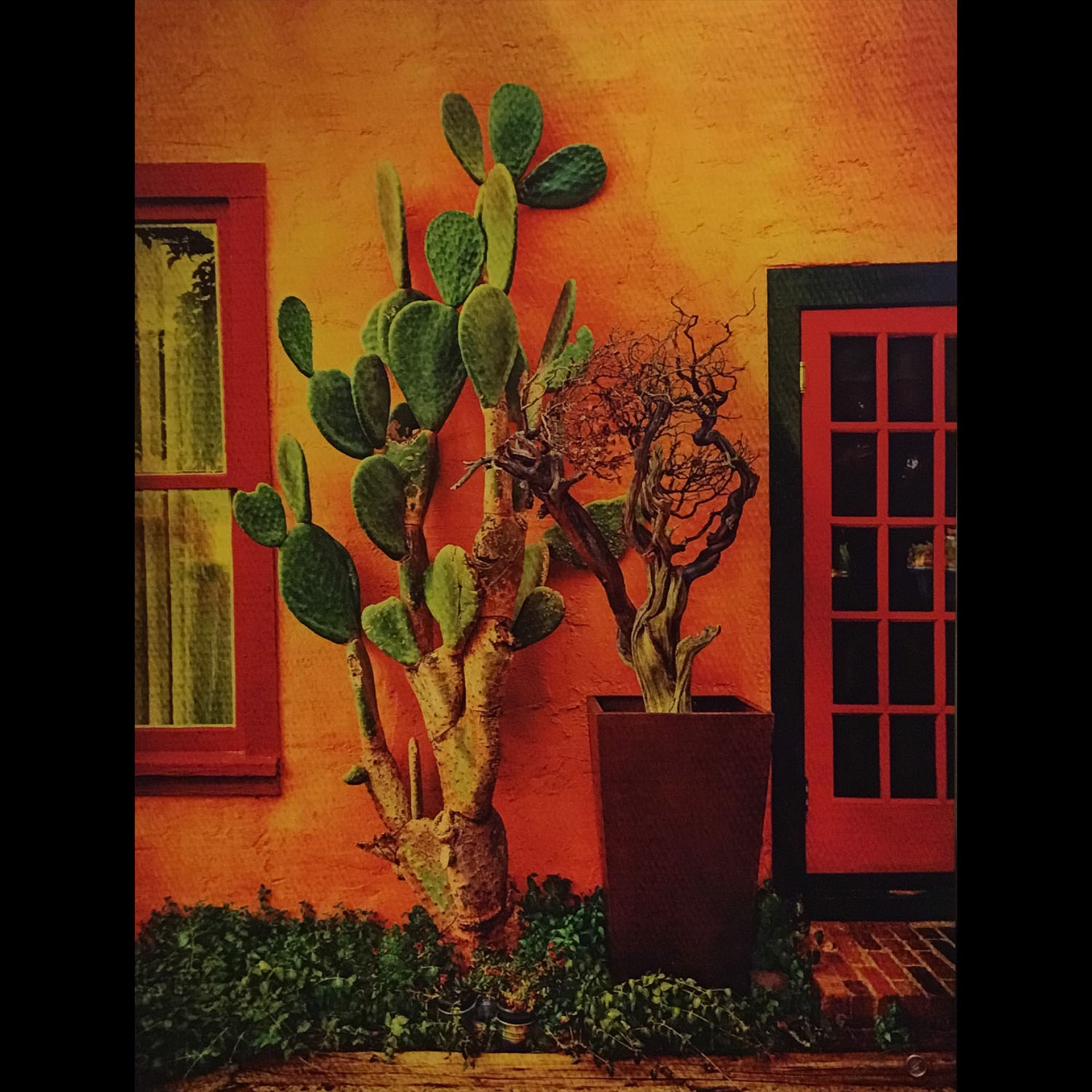 Cactus Door by Bob Coates