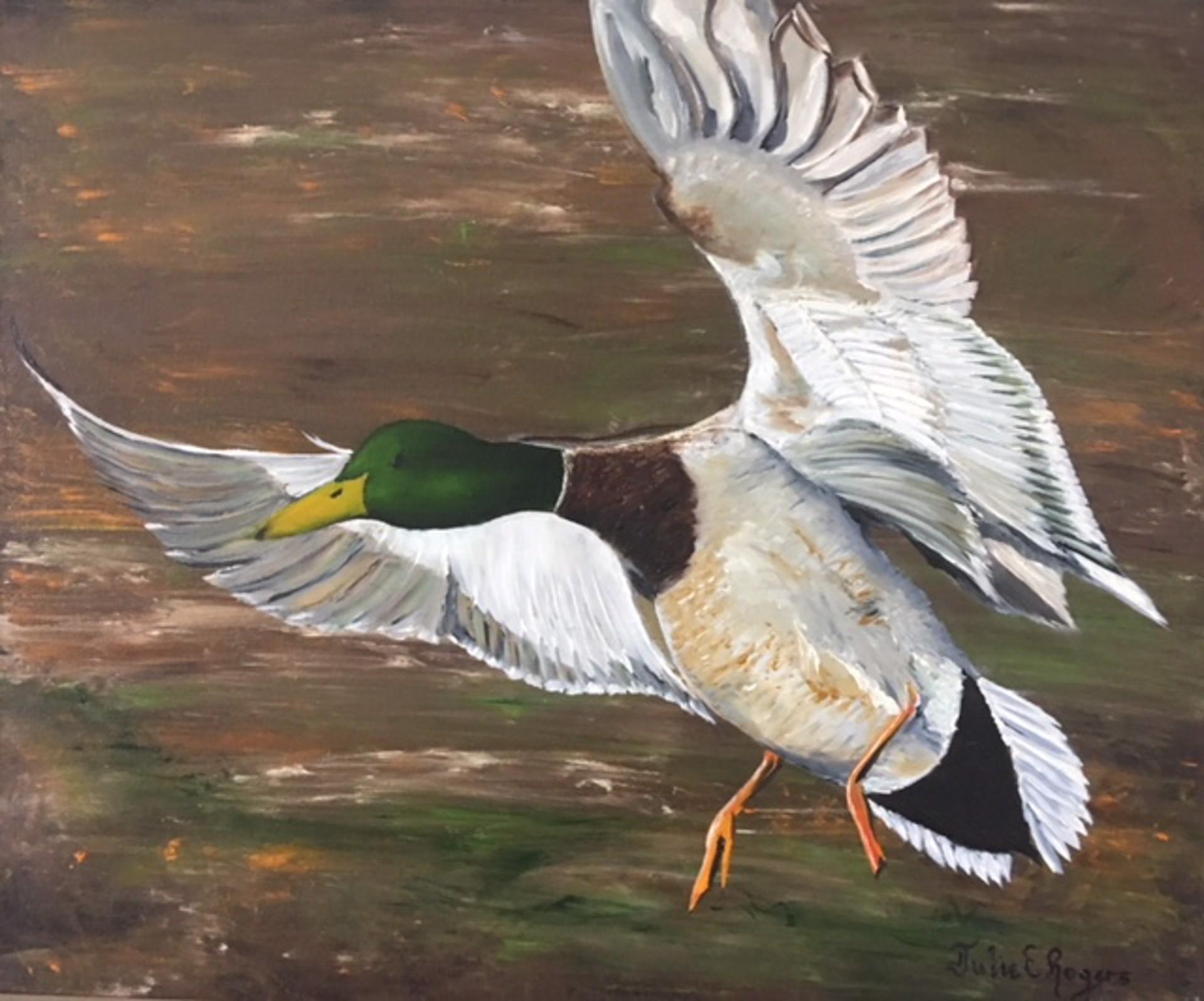 Mallard In Flight by Julie Rogers