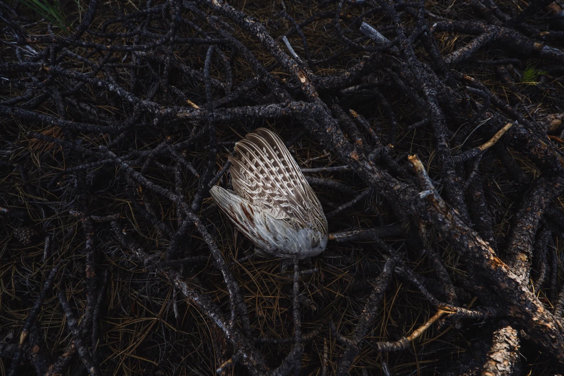 Nest II by Jenya Chernoff