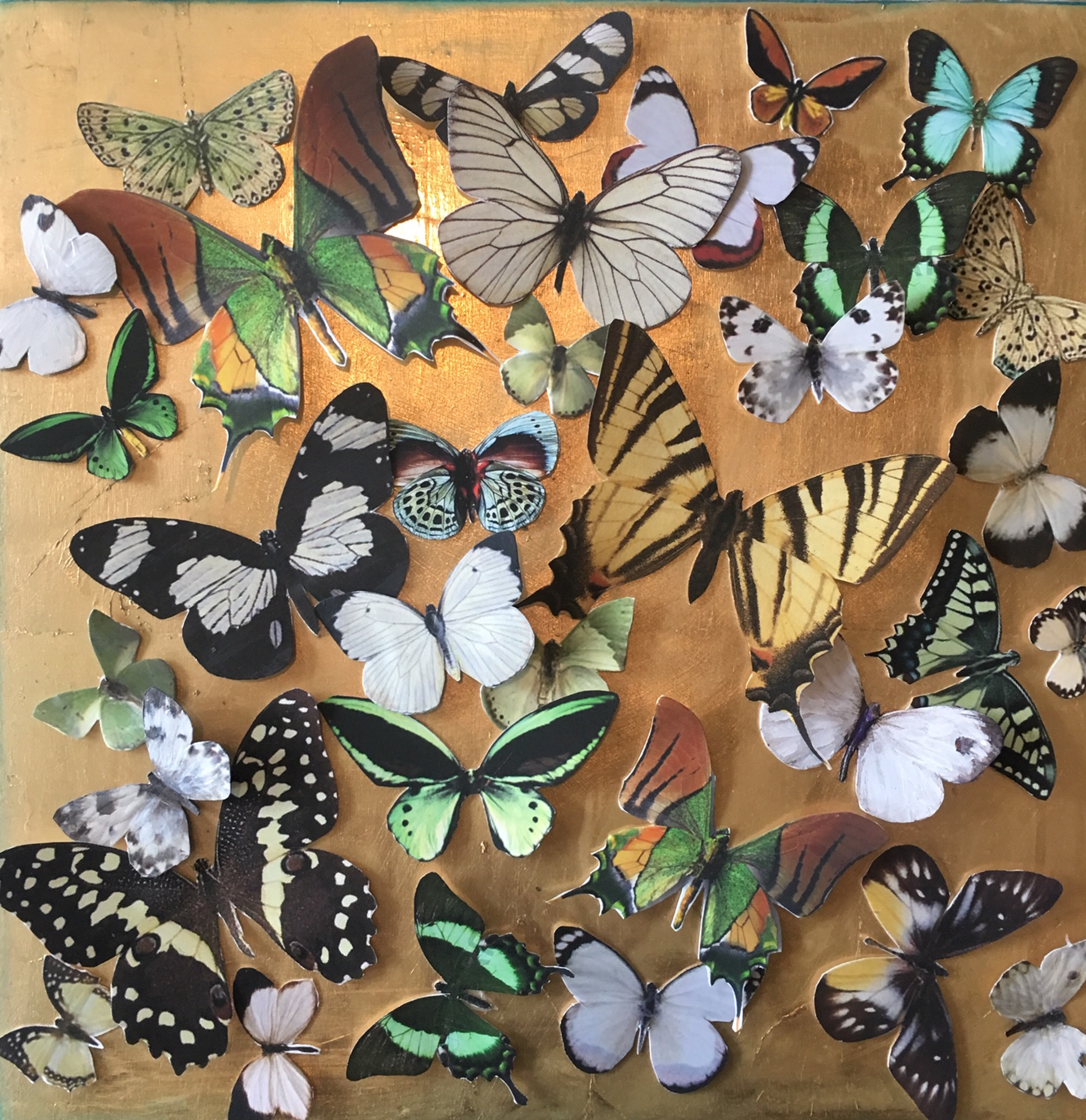 Spring Butterflies by Shelly Bartek