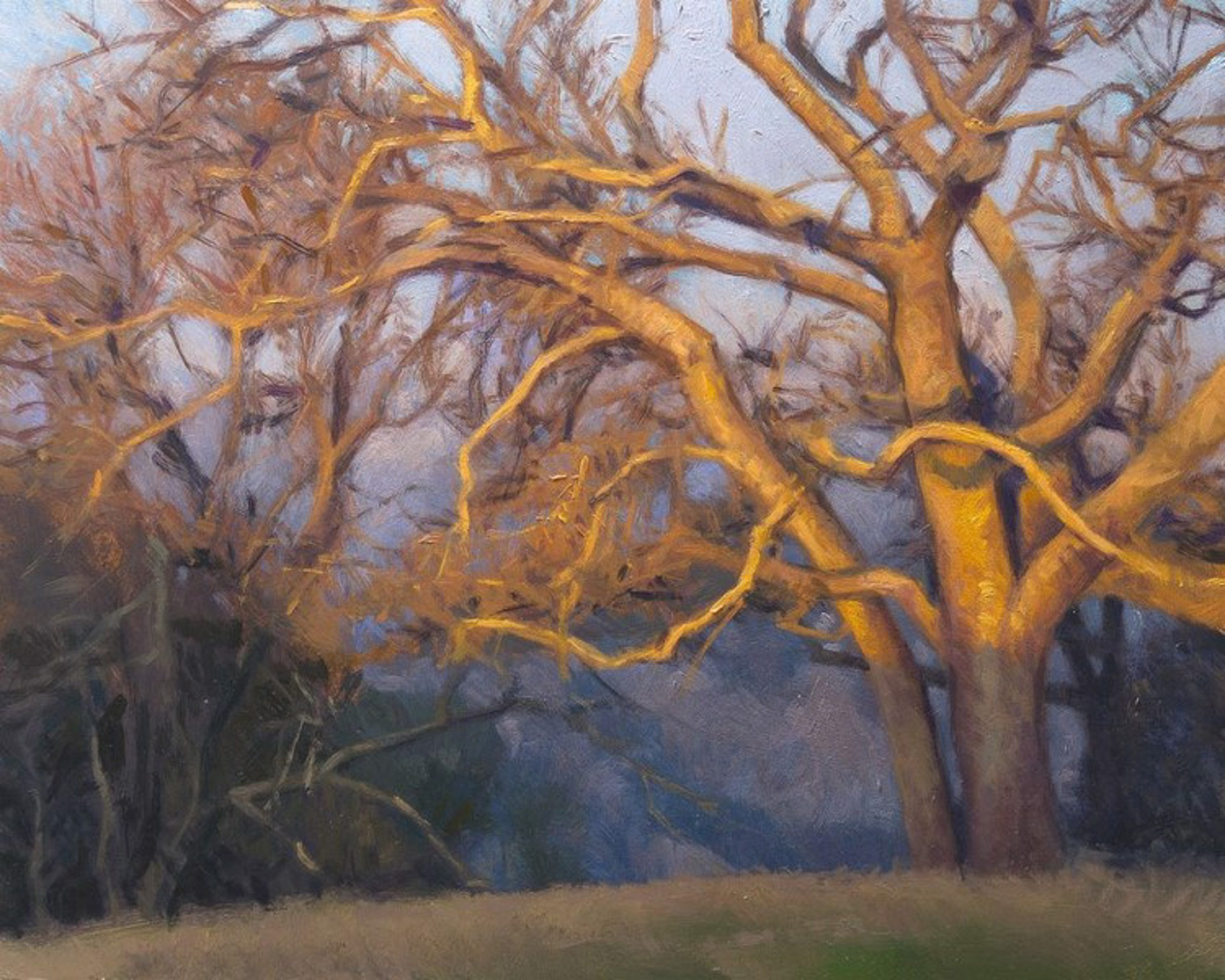 Evening Oaks by Ocean Quigley