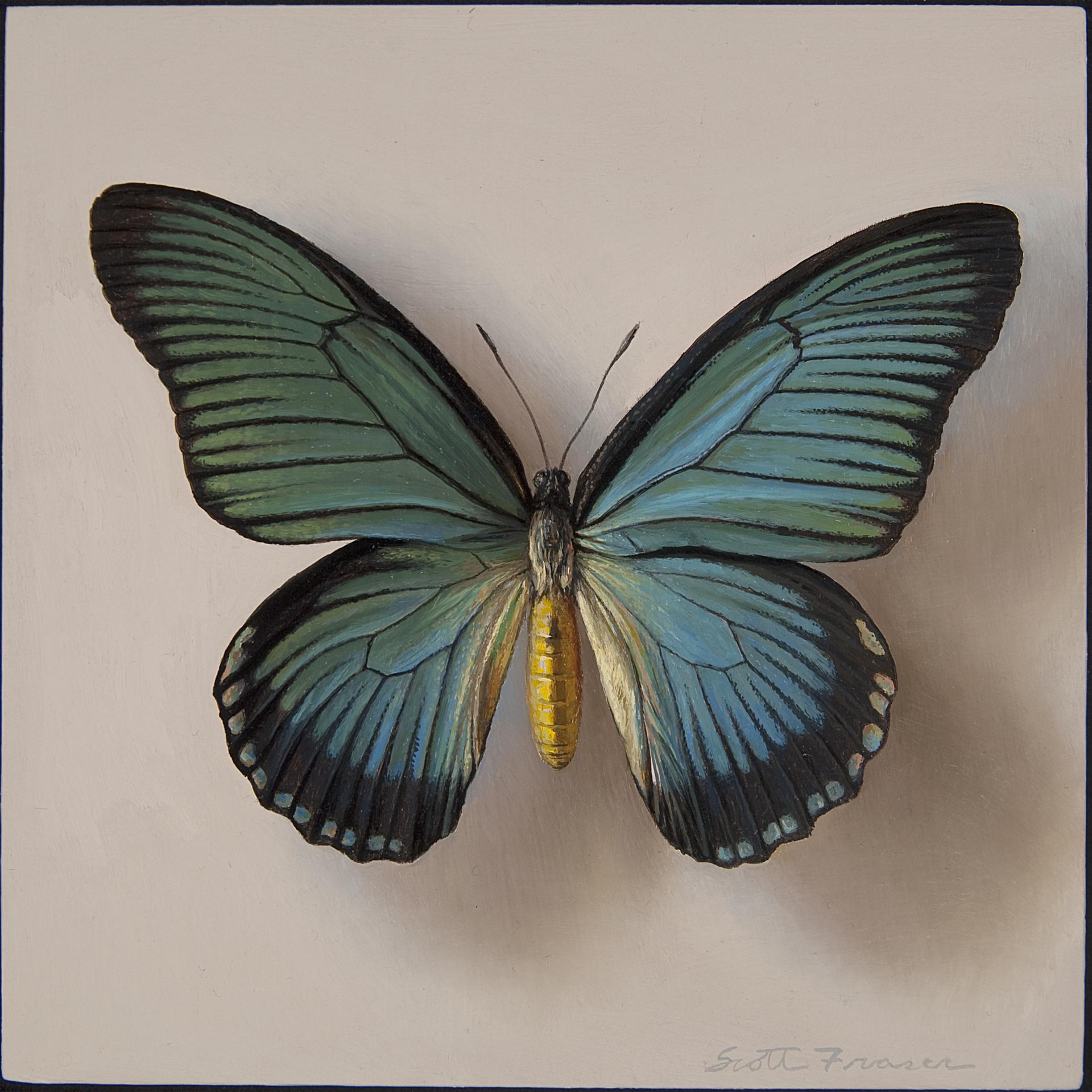 Butterfly by Scott Fraser