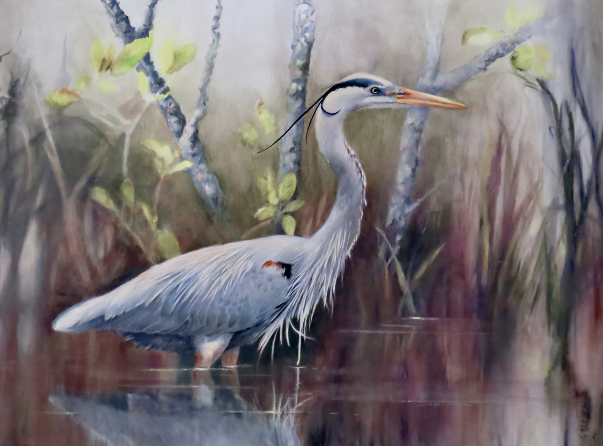 Great Blue Heron in Breeding Plumage by Sherry Egger