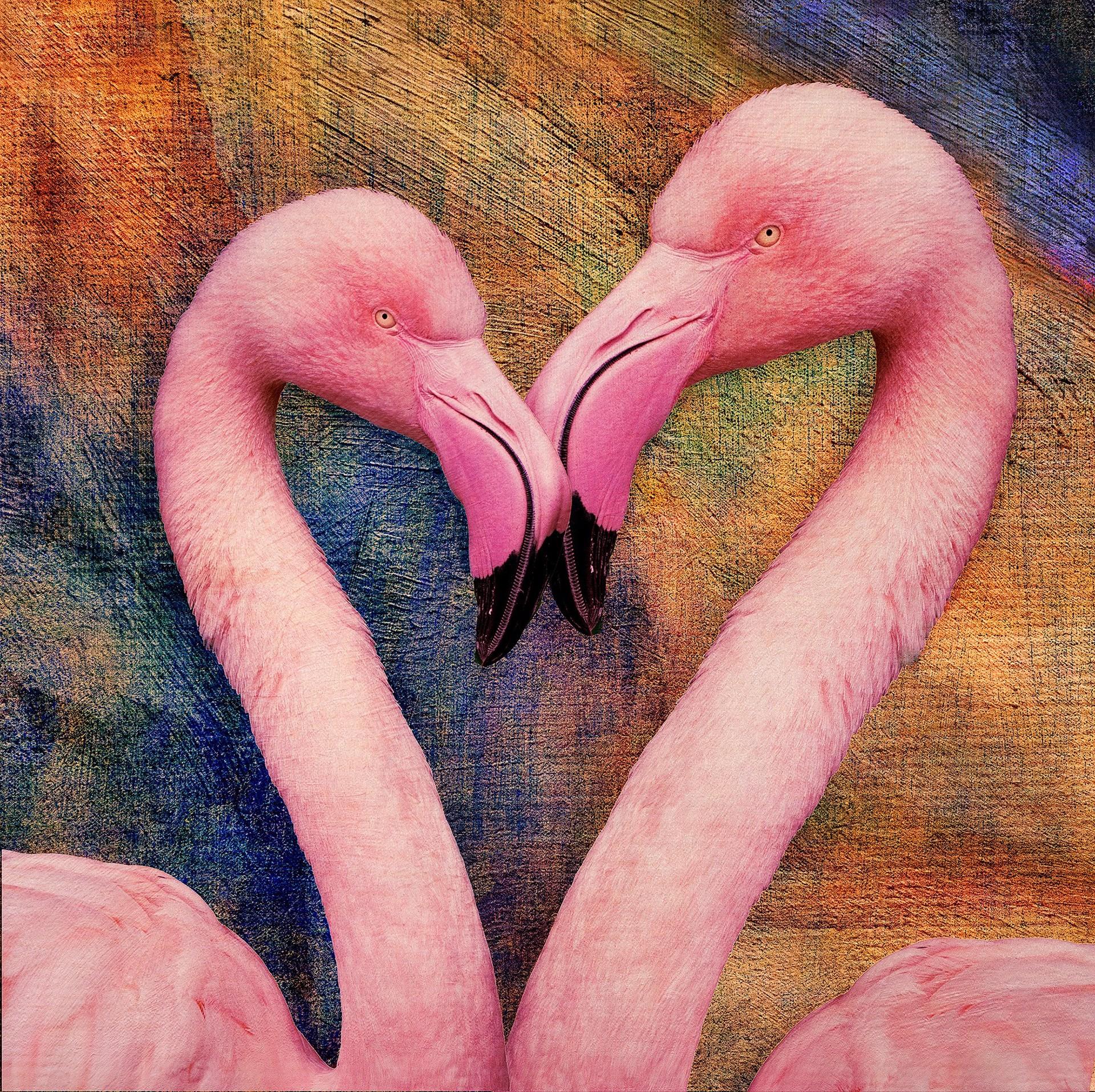 Flamingo Love by Bob Coates
