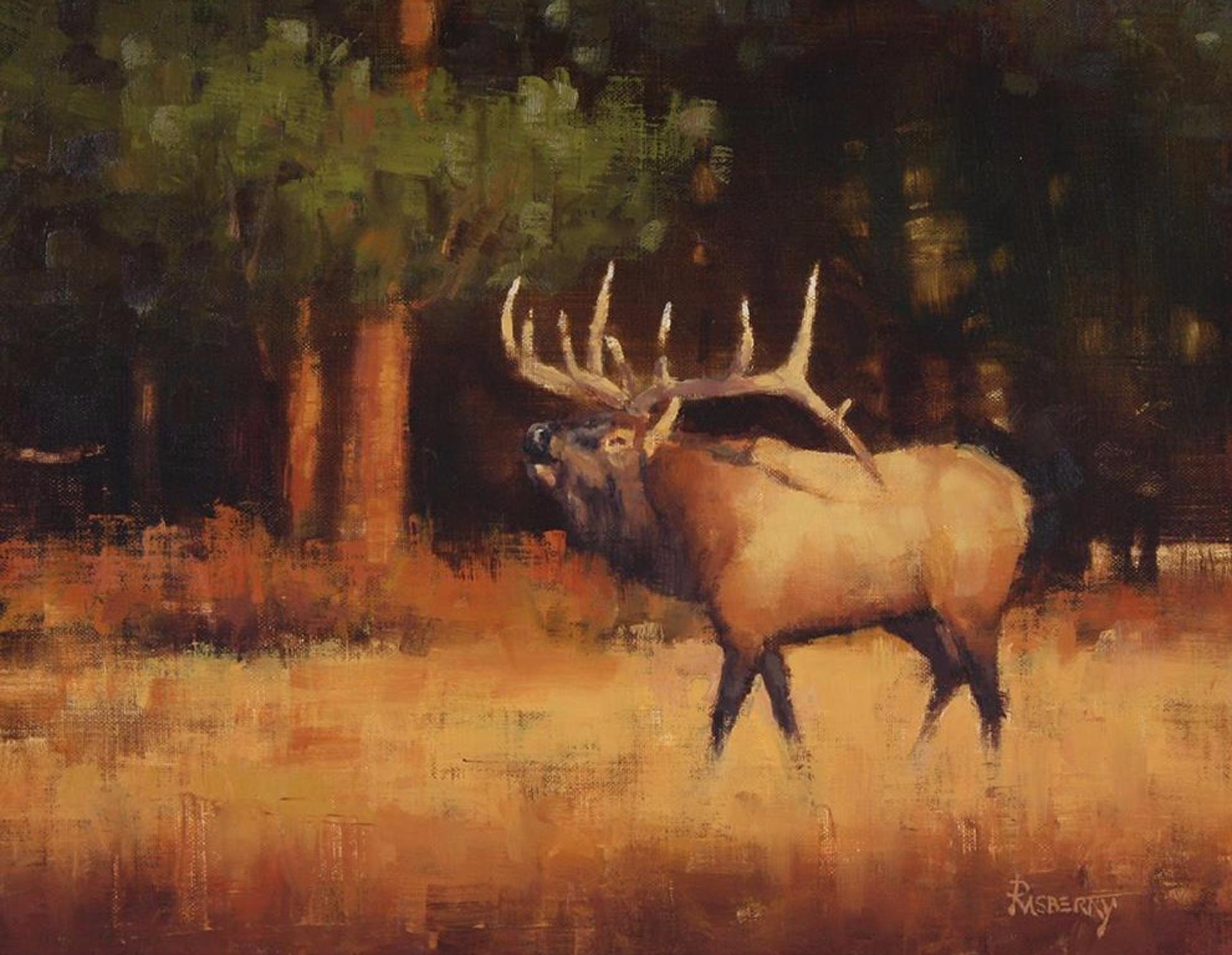 Bugling Season by John Rasberry