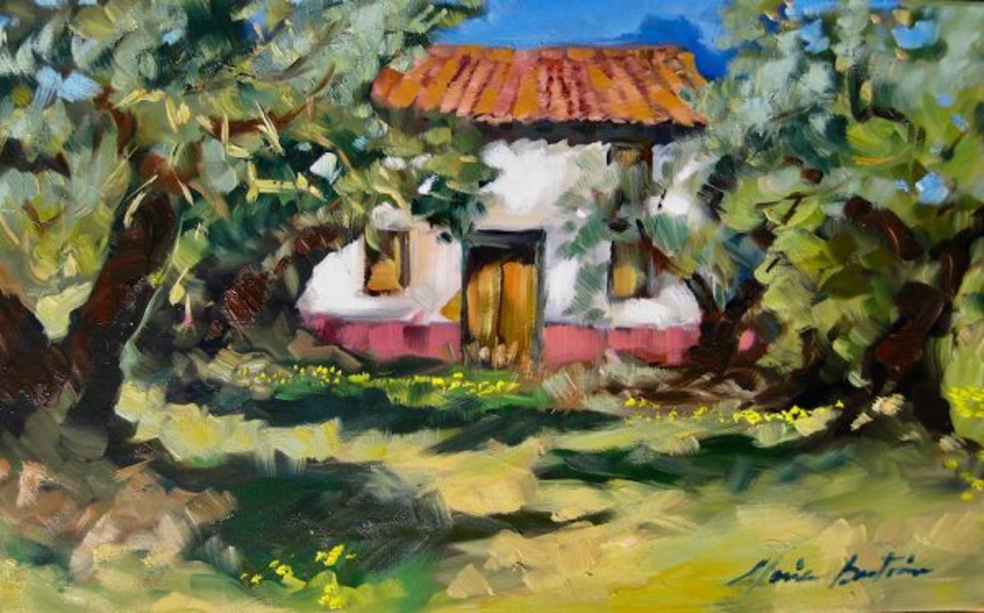Spanish Olive Grove by Maria Bertrán