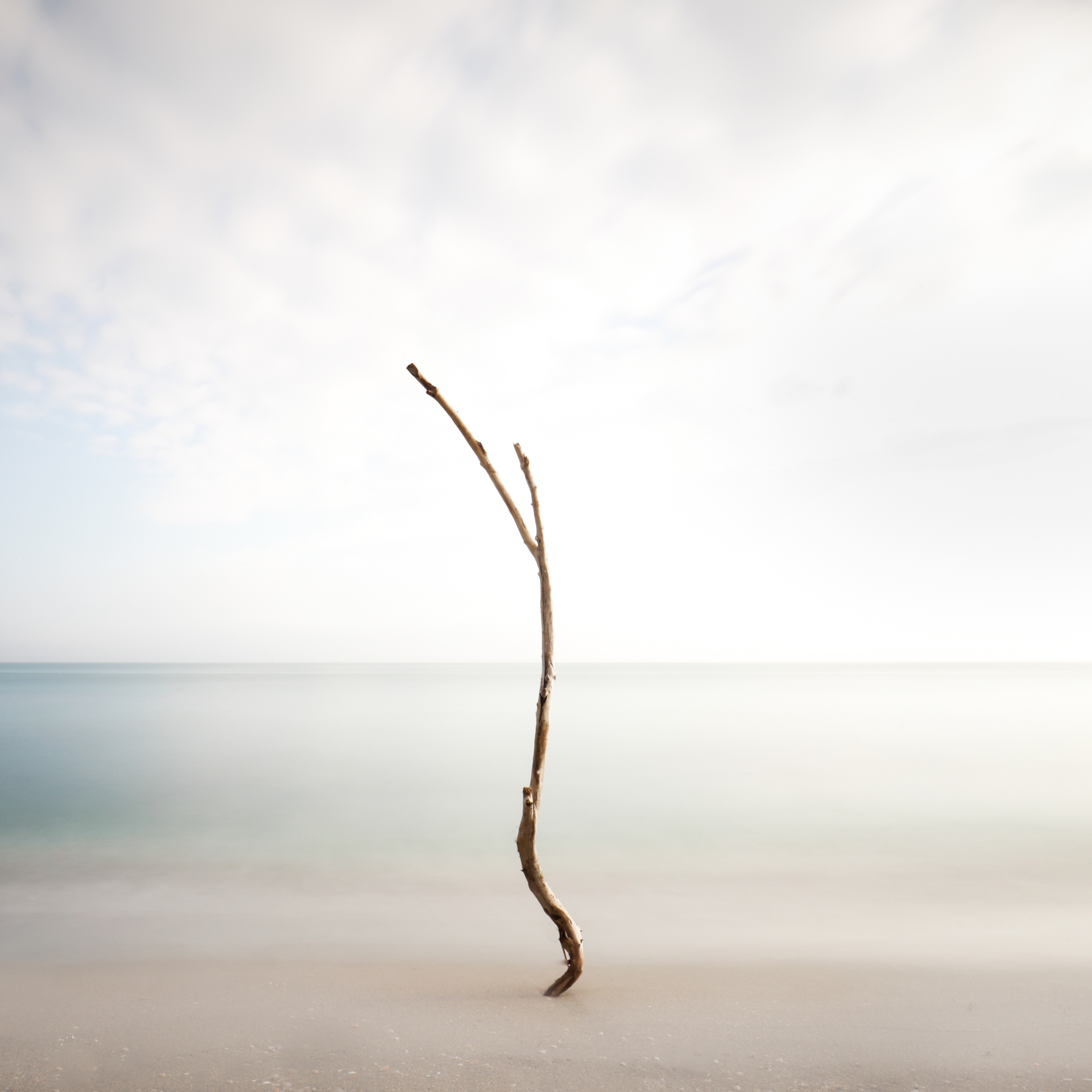 Minimal Tree at Jupiter Island by Keith Ramsdell