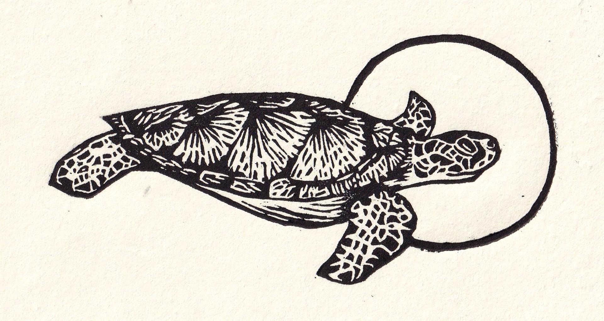 Tortuga by Miguel Jimenez Martinez