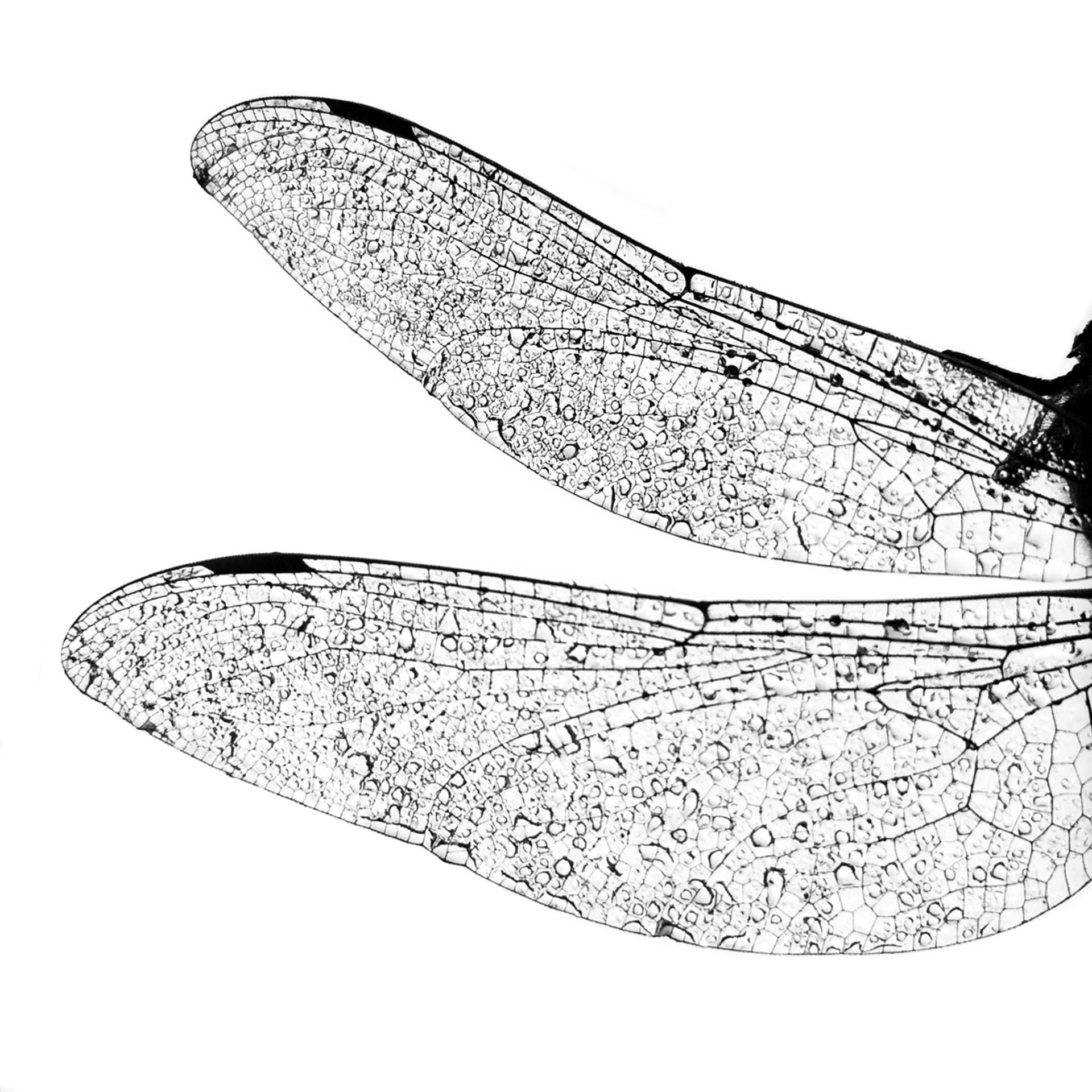 Flight by Allan Bailey