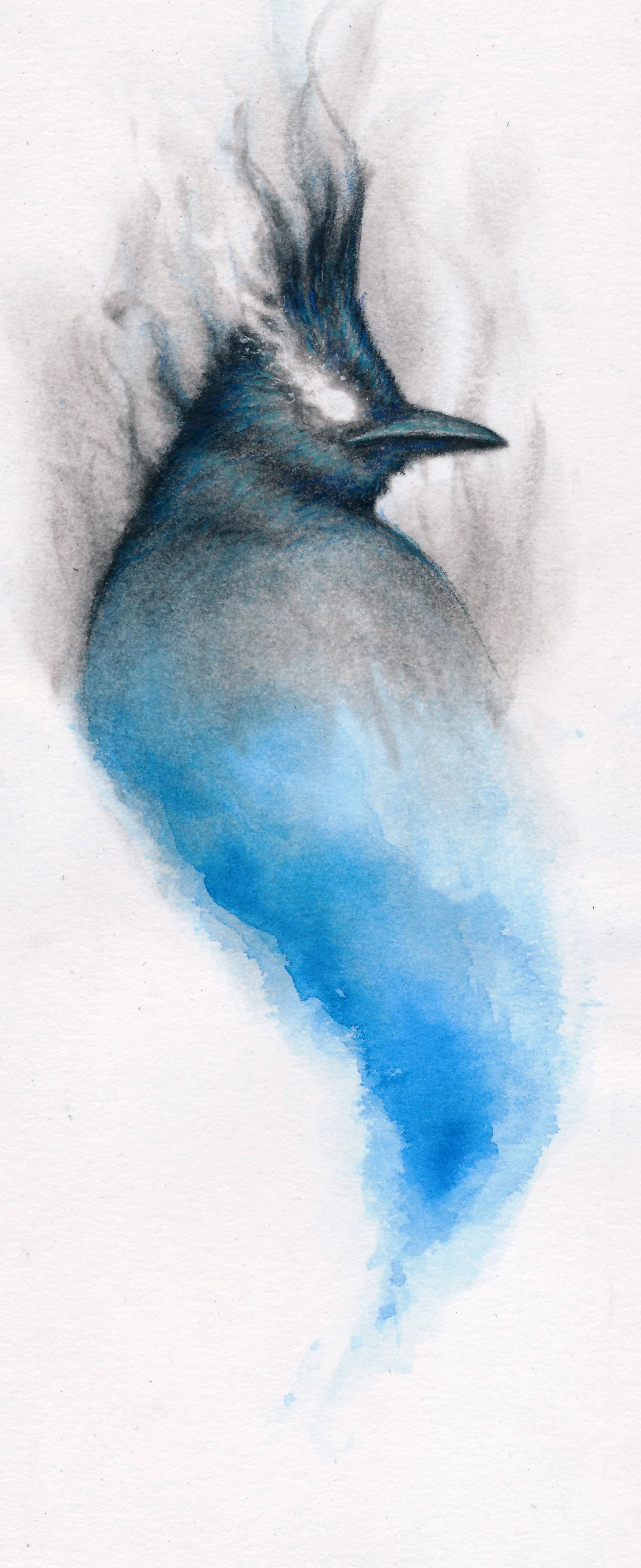 Smokey Stellar Jay by Cody Jimenez